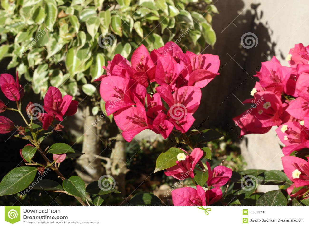 Blooming Bougainvillea Flowers Background 6x9ft European Style Polyester Photography Backdrop Romantic Narrow Street Green Ivy Stone Steps Elegant Holiday Lover Baby Studio Photo Prop Decor