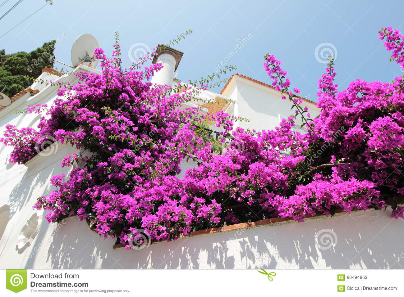 Bougainvillea Flowers A House Entrance Anacapri Italy Stock Imag