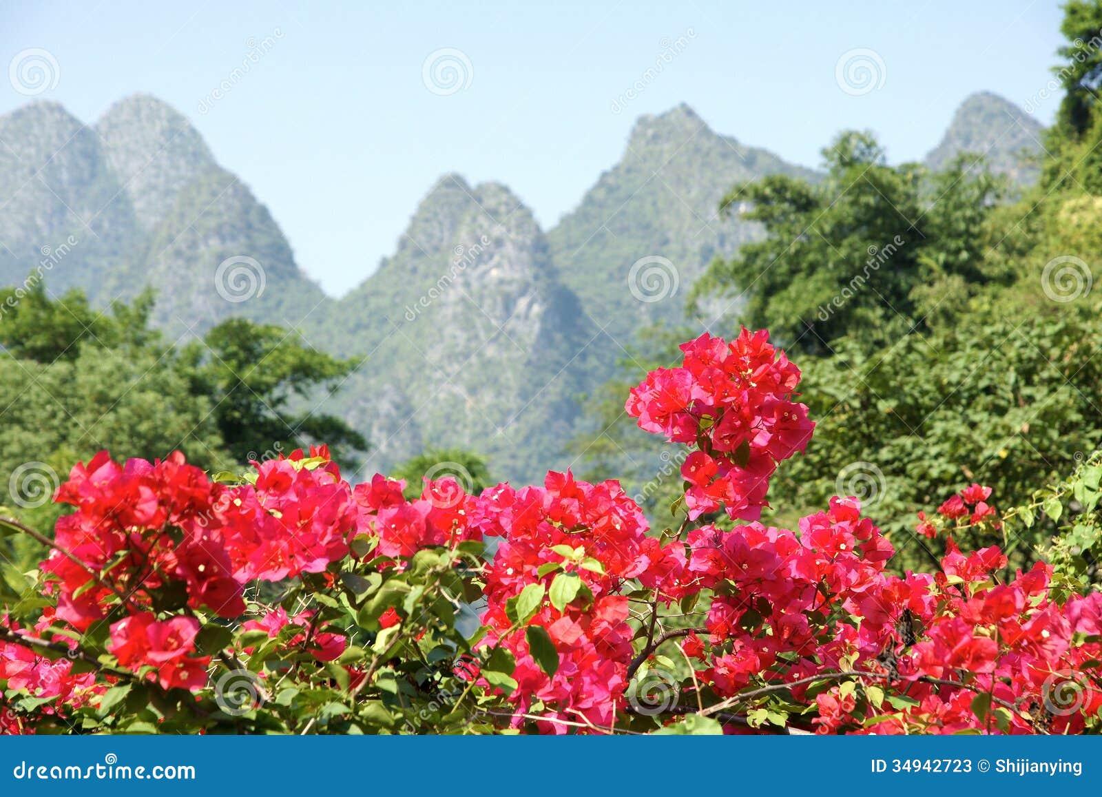 Bougainvillea kwiaty