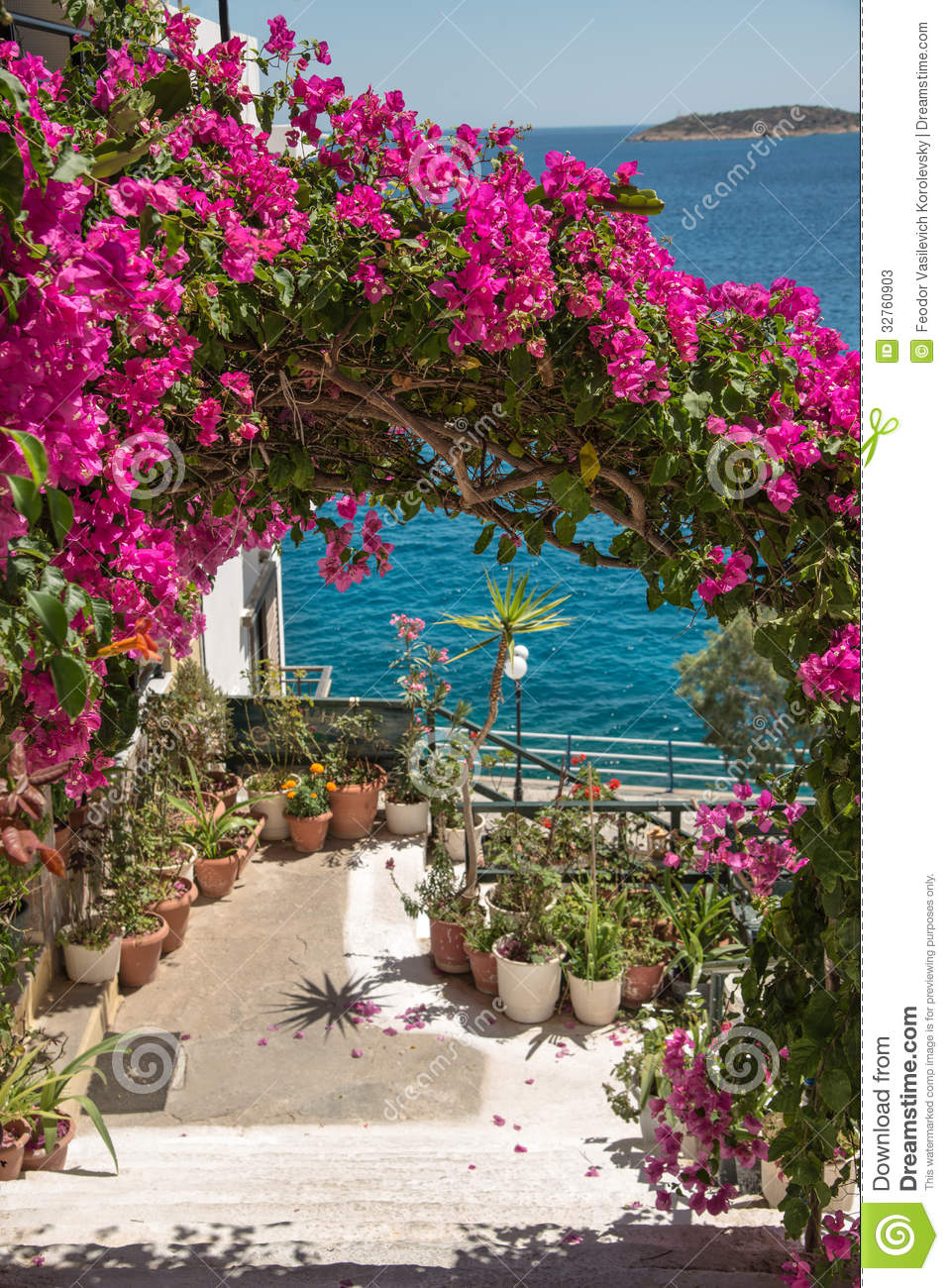 Bougainvillea Is A Popular Decoration Cities In The