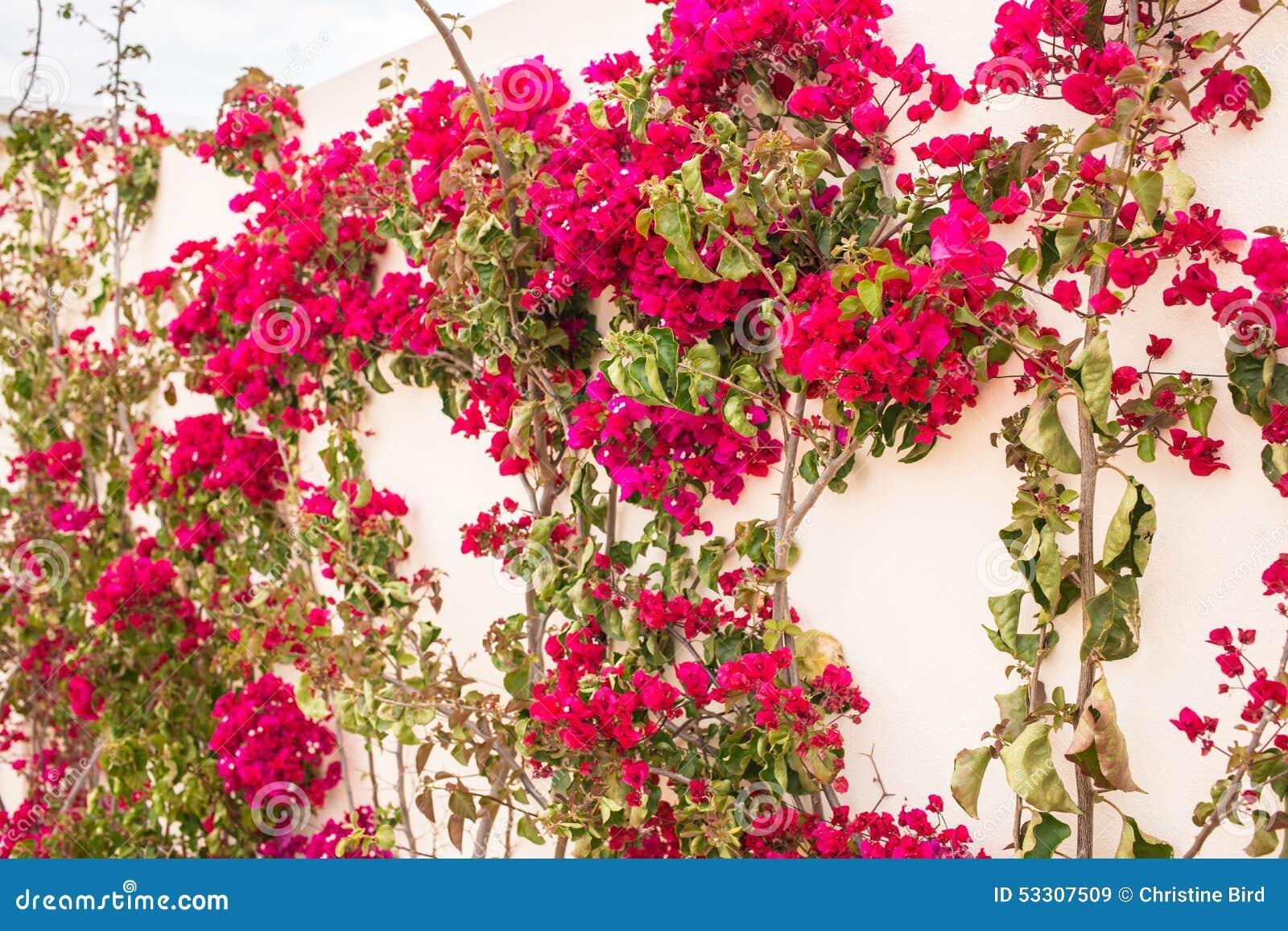 Letter K Pictures Images amp Photos  Photobucket