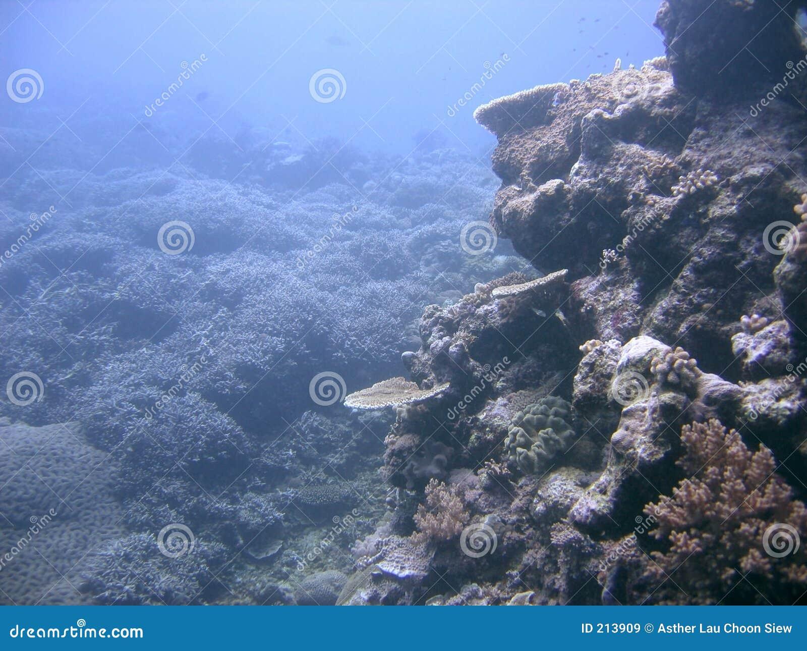 Boulder dei coralli