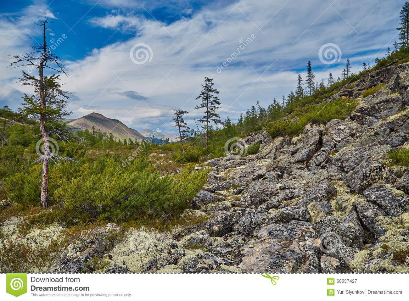 Boulders slope of mountain. A taiga in the summer. A stream valley