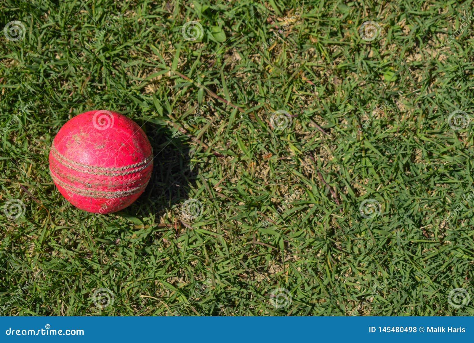 Boule de cricket sur une herbe verte Équipement de cricket d isolement sur un fond vert
