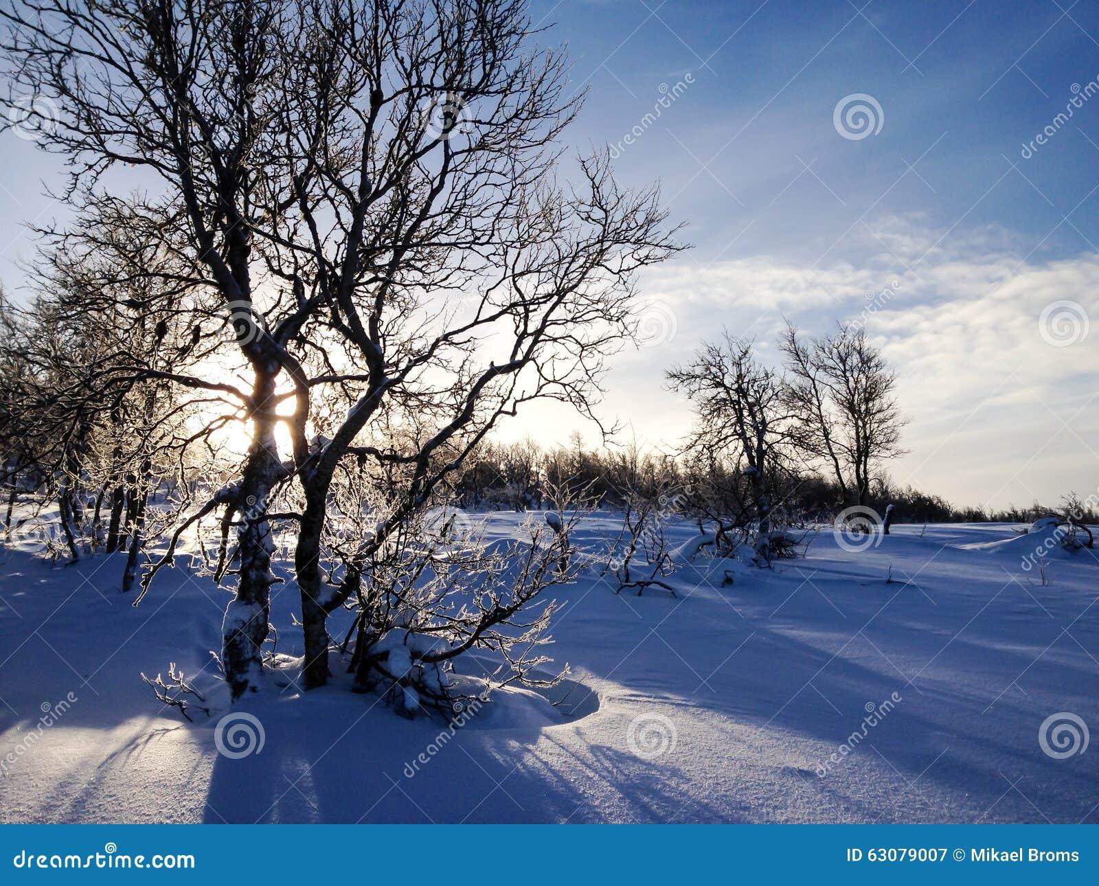 Download Bouleau De Montagne D'hiver Image stock - Image du hausse, silhouette: 63079007