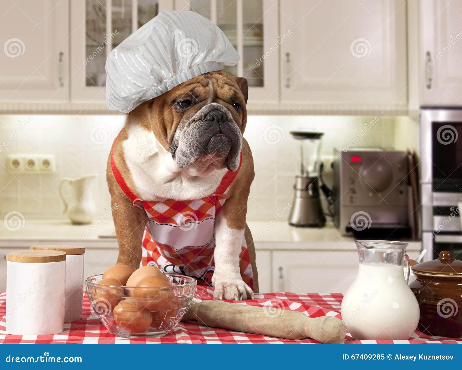 Bouledogue anglais dans la cuisine image stock image for Bouledogue inglese