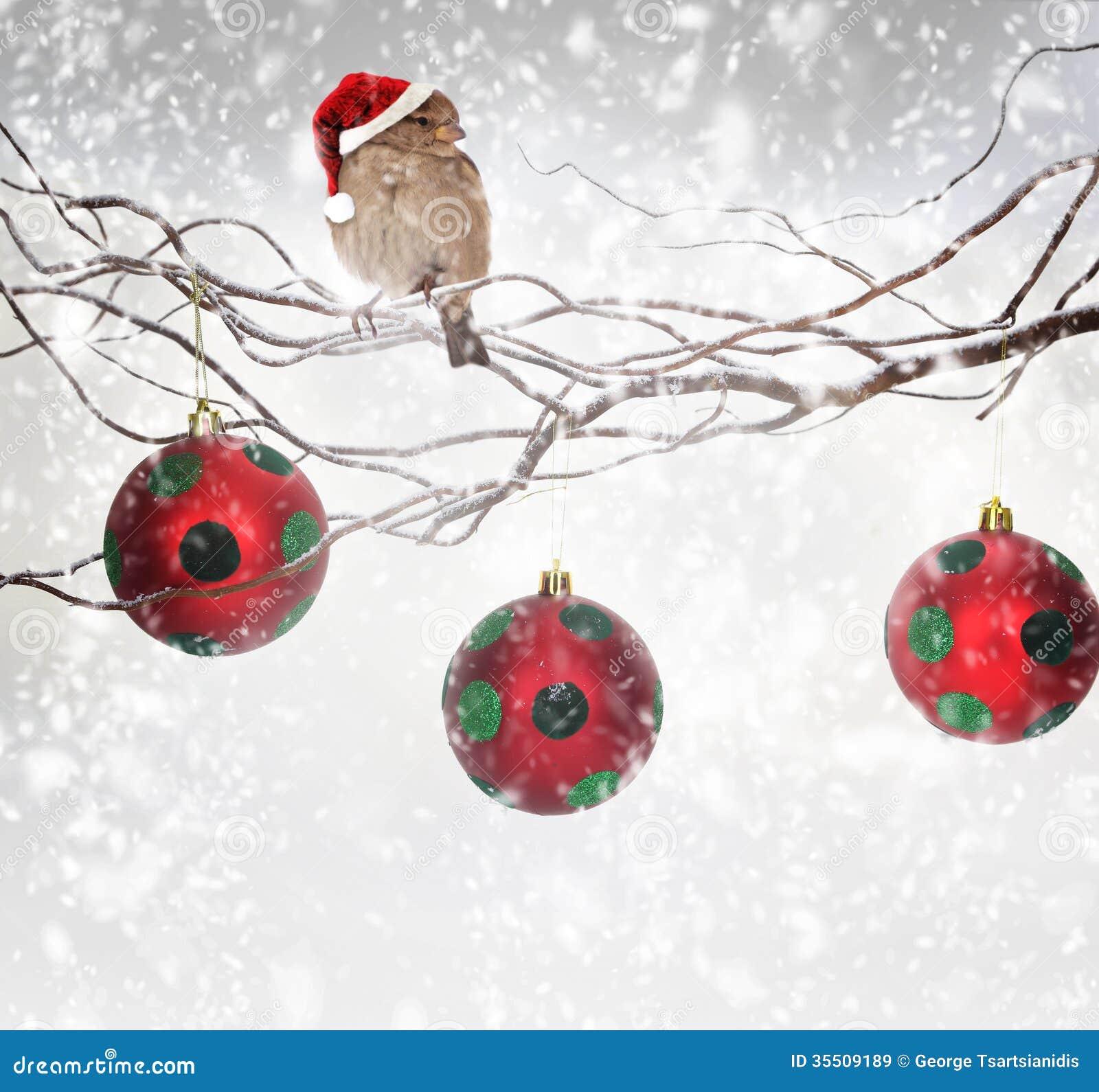 boules de no l et oiseau de moineau sur la branche neigeuse images libres de droits image. Black Bedroom Furniture Sets. Home Design Ideas