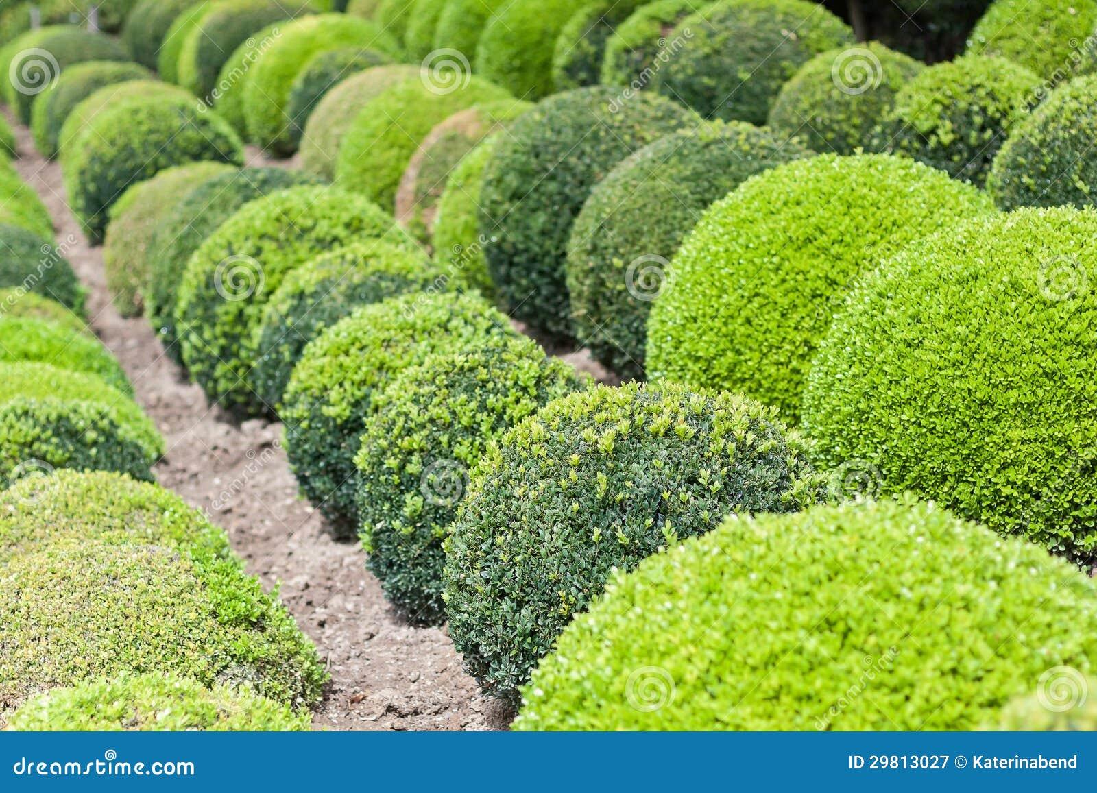 Boules vertes de jardin en france image stock image du for Jardin en france