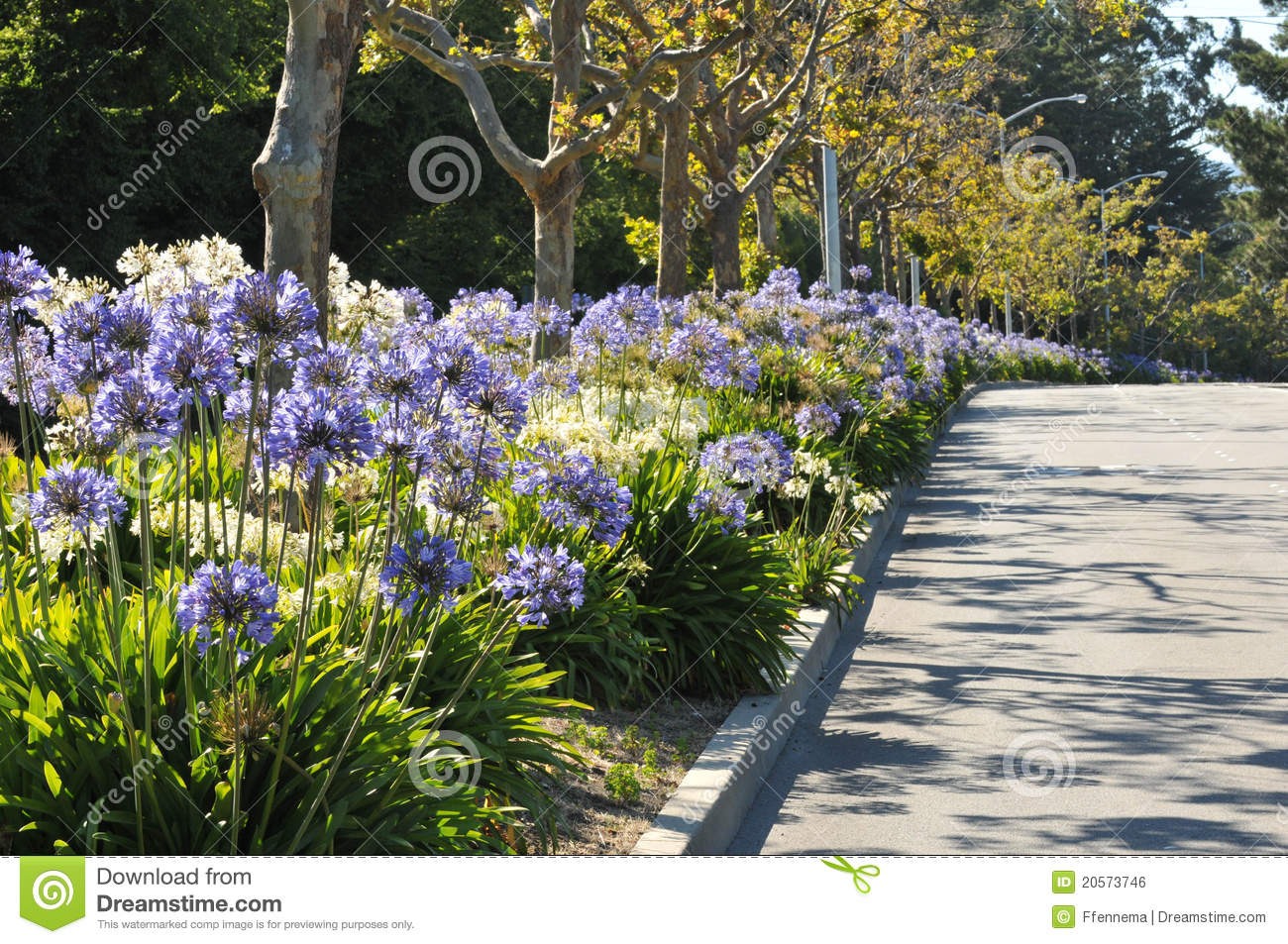 Boulevard Median Has Flowers And Trees Royalty Free Stock Image Image 2057