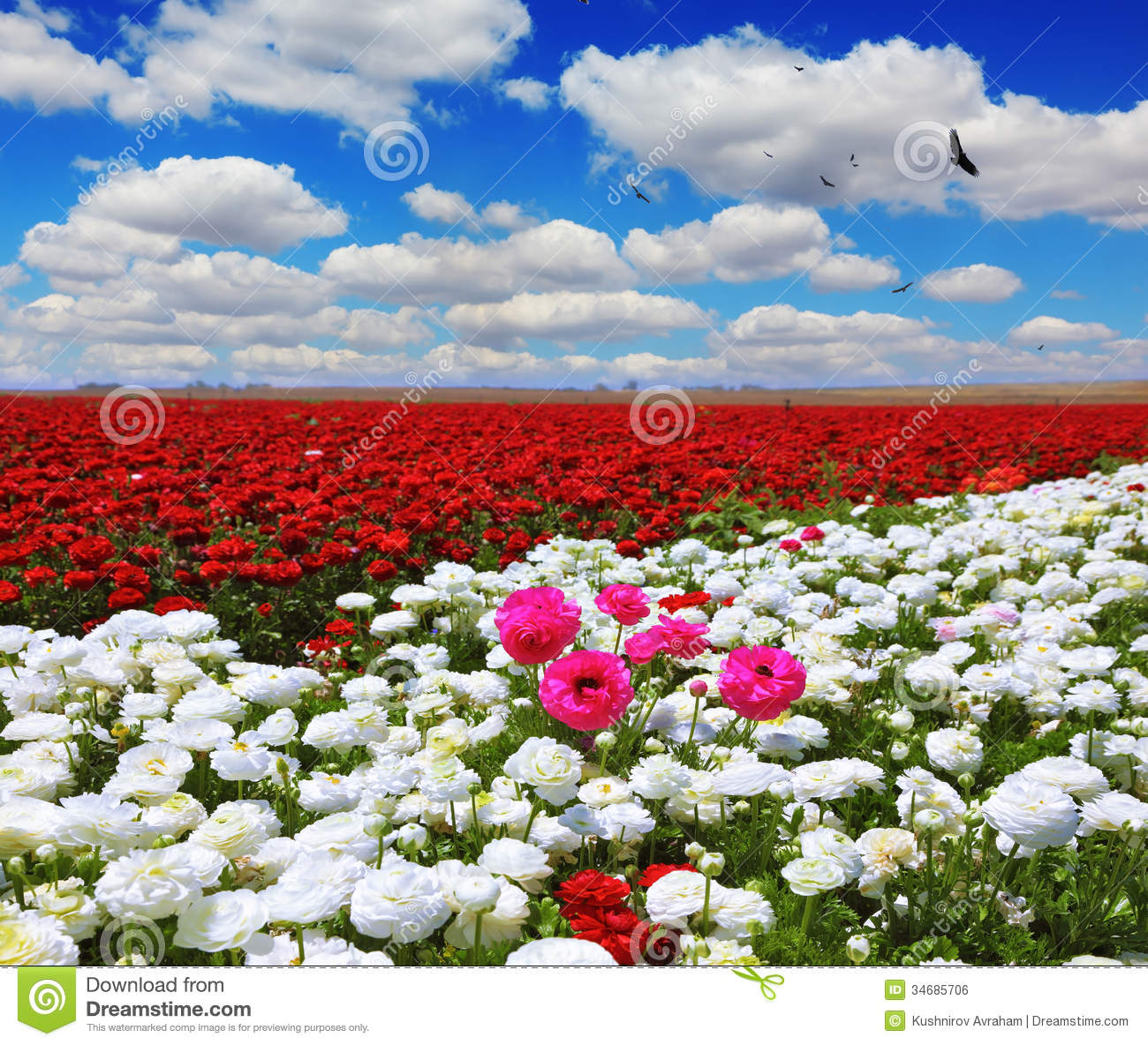 bright red flowers field - photo #46