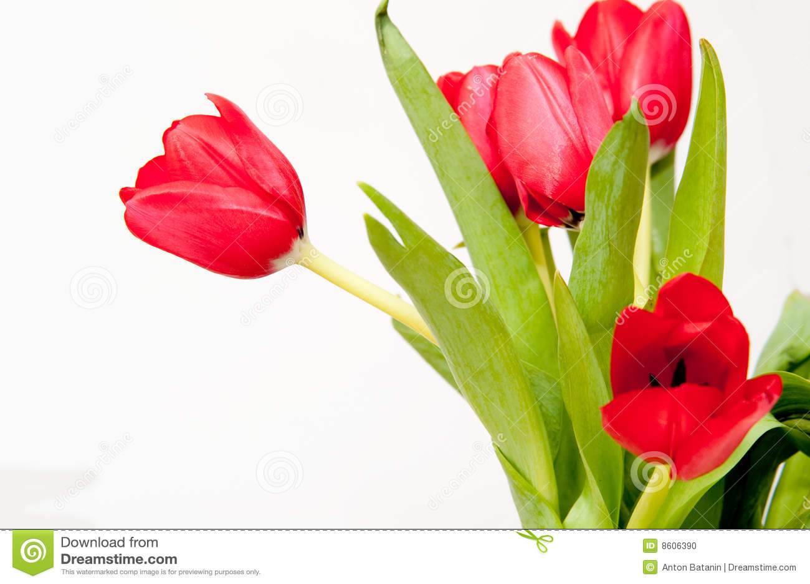 Bouqet de tulipanes rojos