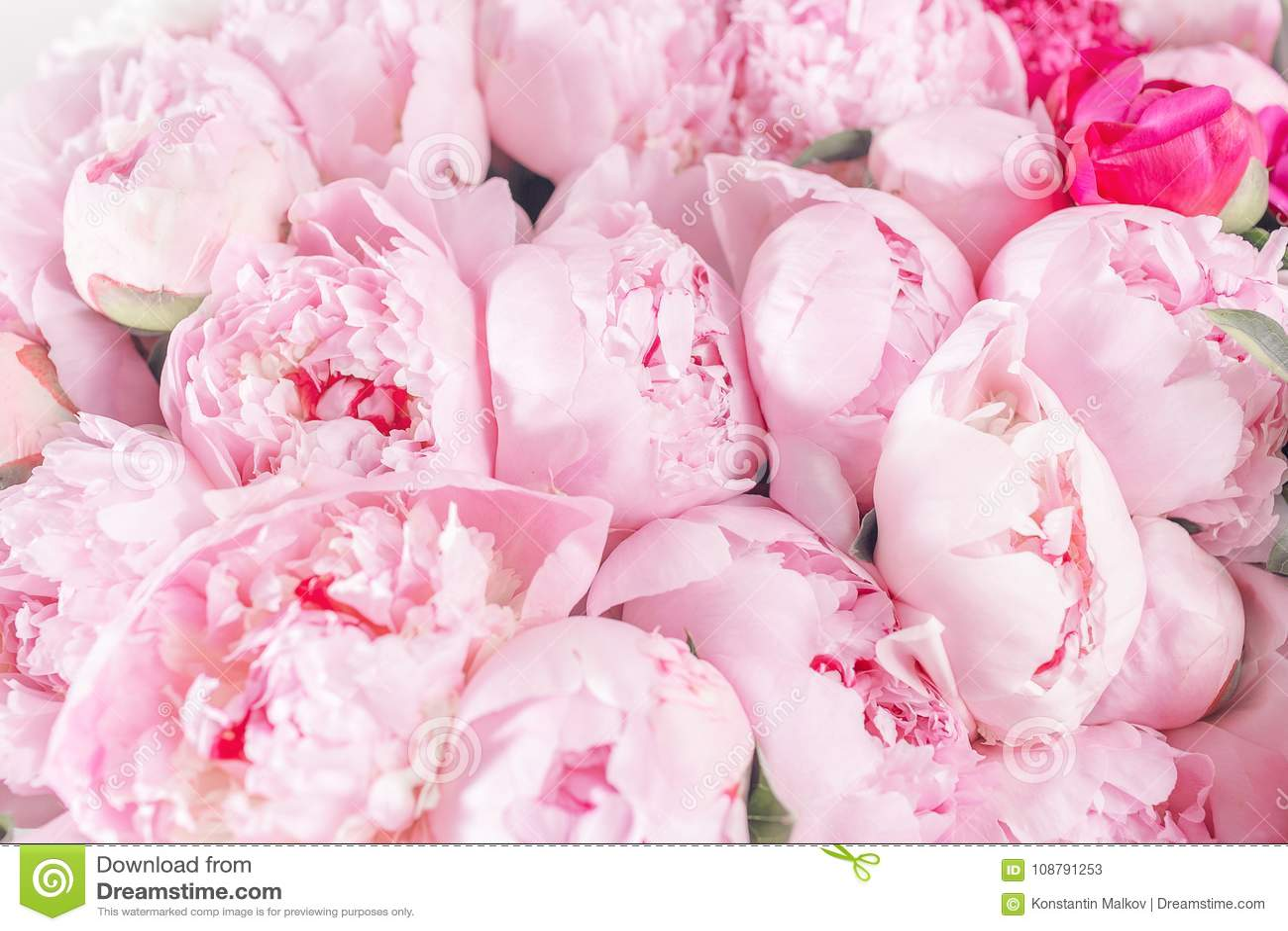 Bouquet Elegant De Beaucoup De Pivoines De Fin Rose De Couleur Belle