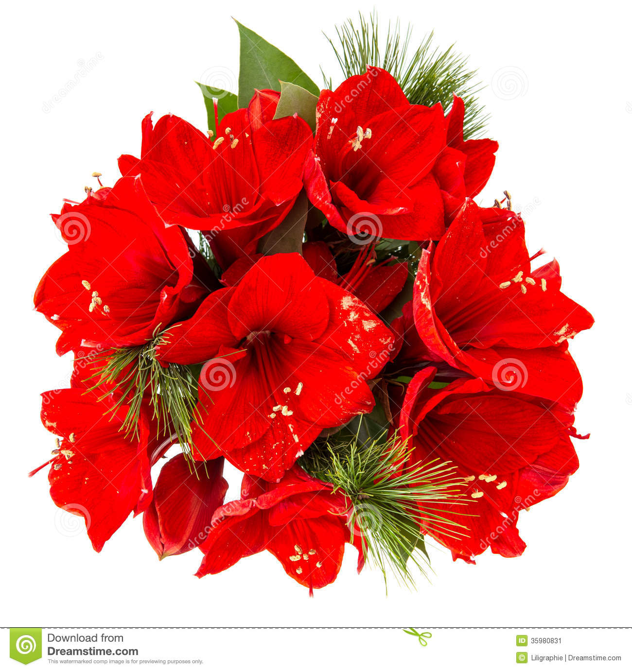 bouquet amaryllis red christmas flowers isolated white background 35980831