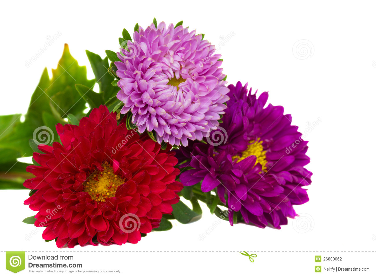bouquet of aster flowers stock photography  image, Beautiful flower