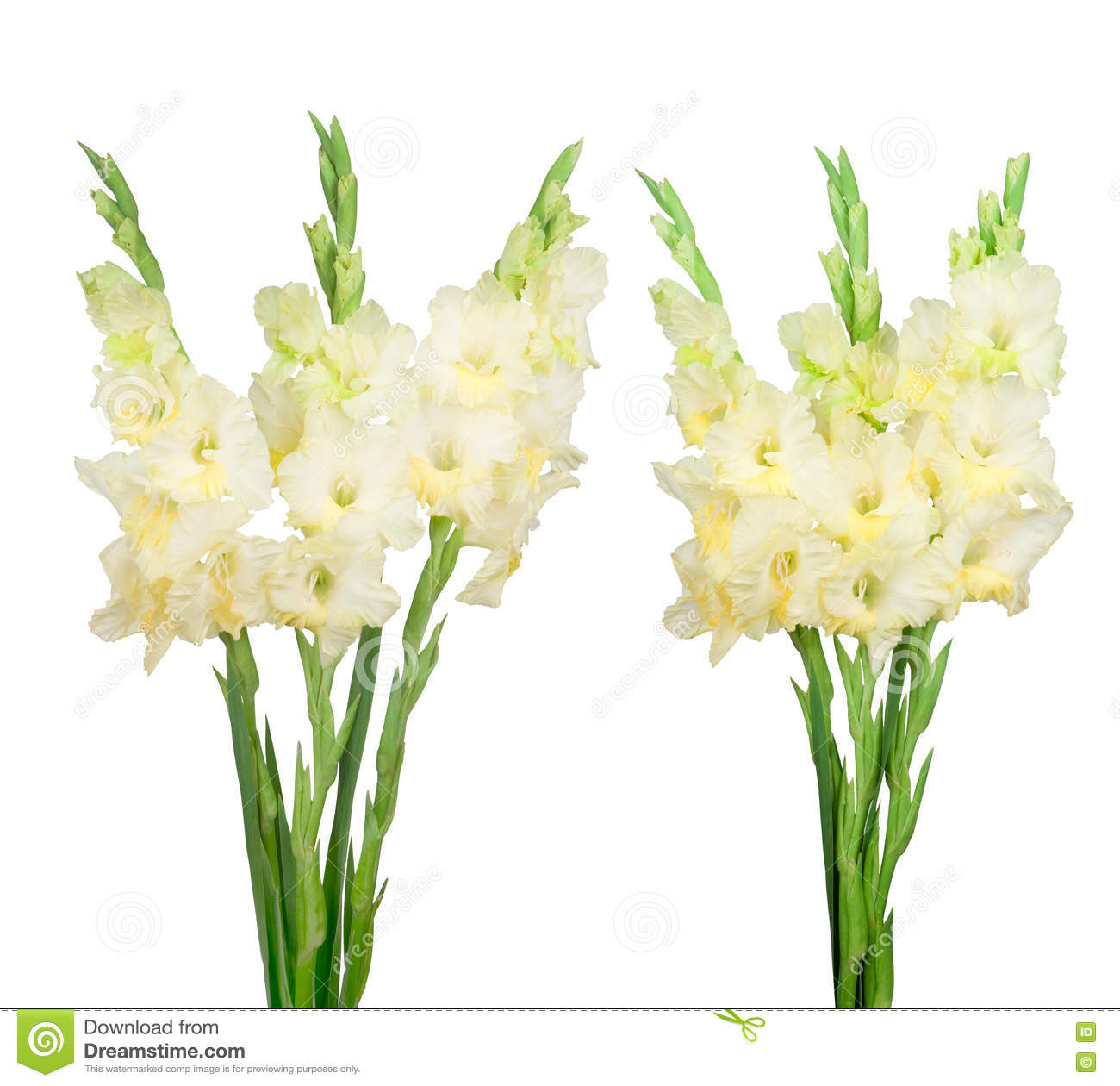 bouquet avec le gla eul jaune image stock image du gladiolus automne 75697381. Black Bedroom Furniture Sets. Home Design Ideas