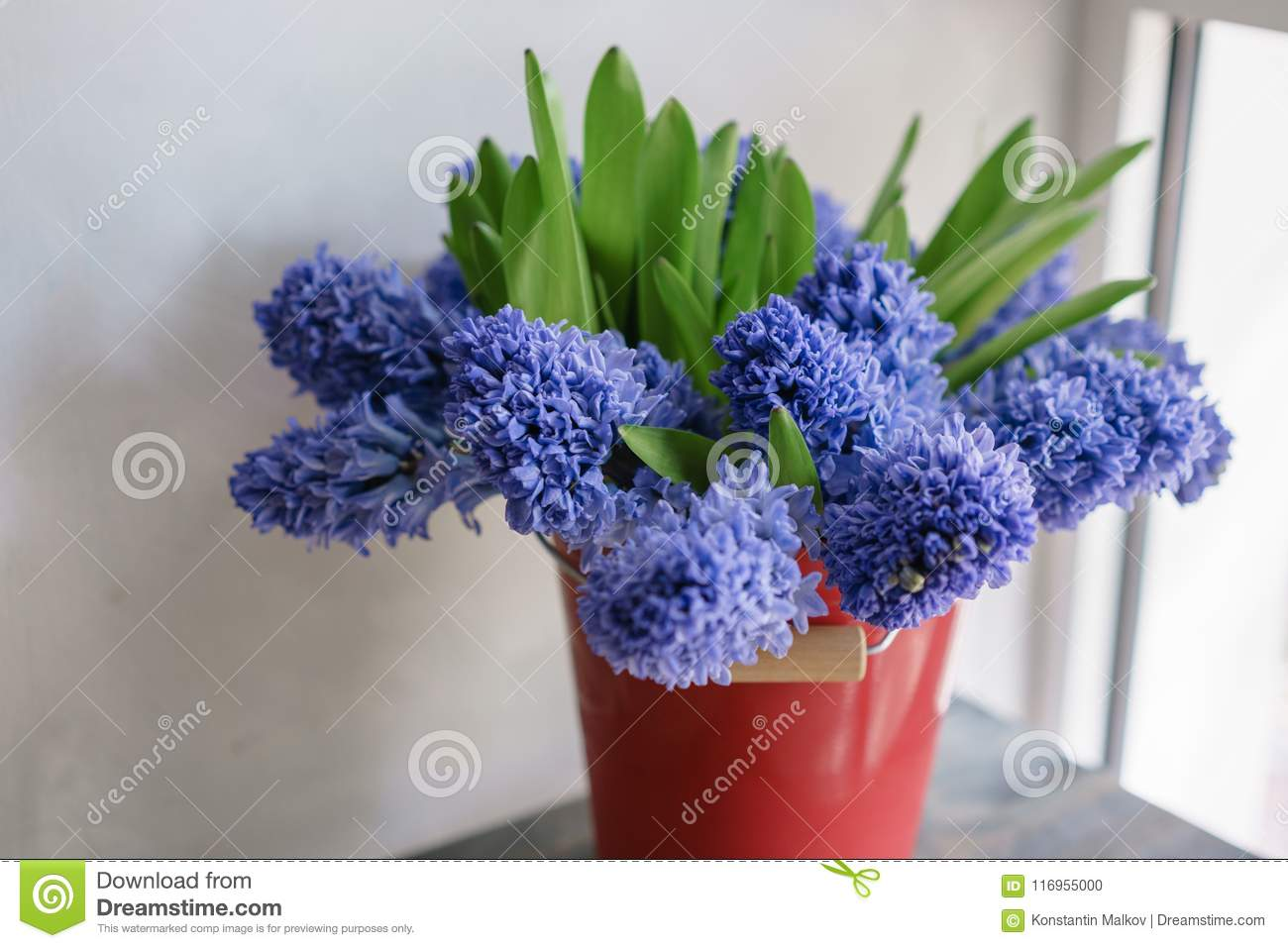 Bouquet Of Beautiful Blue Hyacinths Close Up Spring Flowers In Red