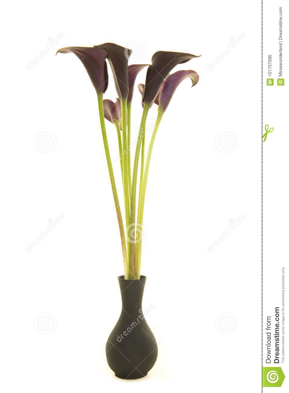 Bouquet Of Black Calla Lily Flowers In A Black Vase On A White B