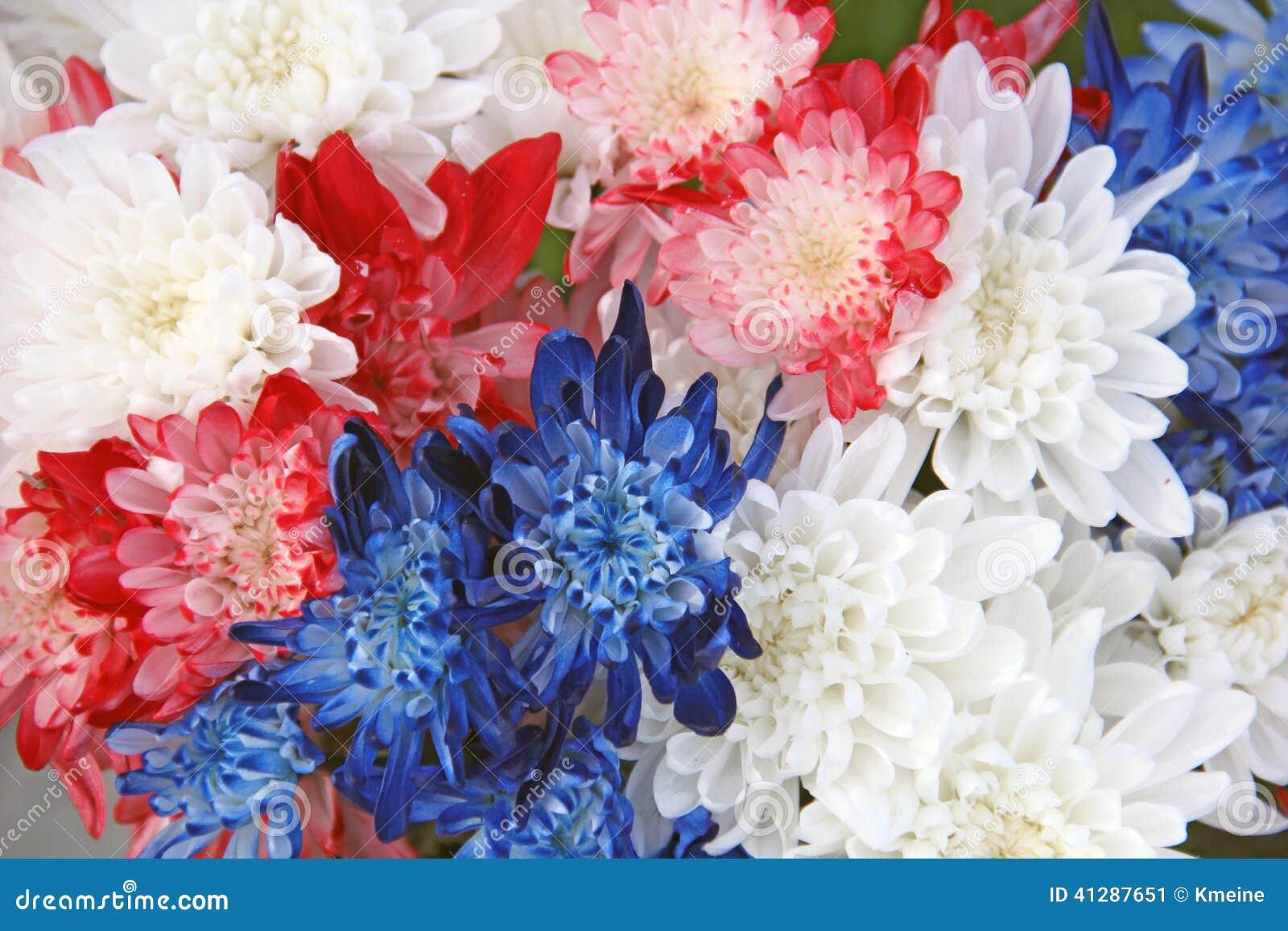 Bouquet bleu blanc rouge de fleur de chrysanth me photo stock image 41287651 - Fleur bleu blanc rouge ...