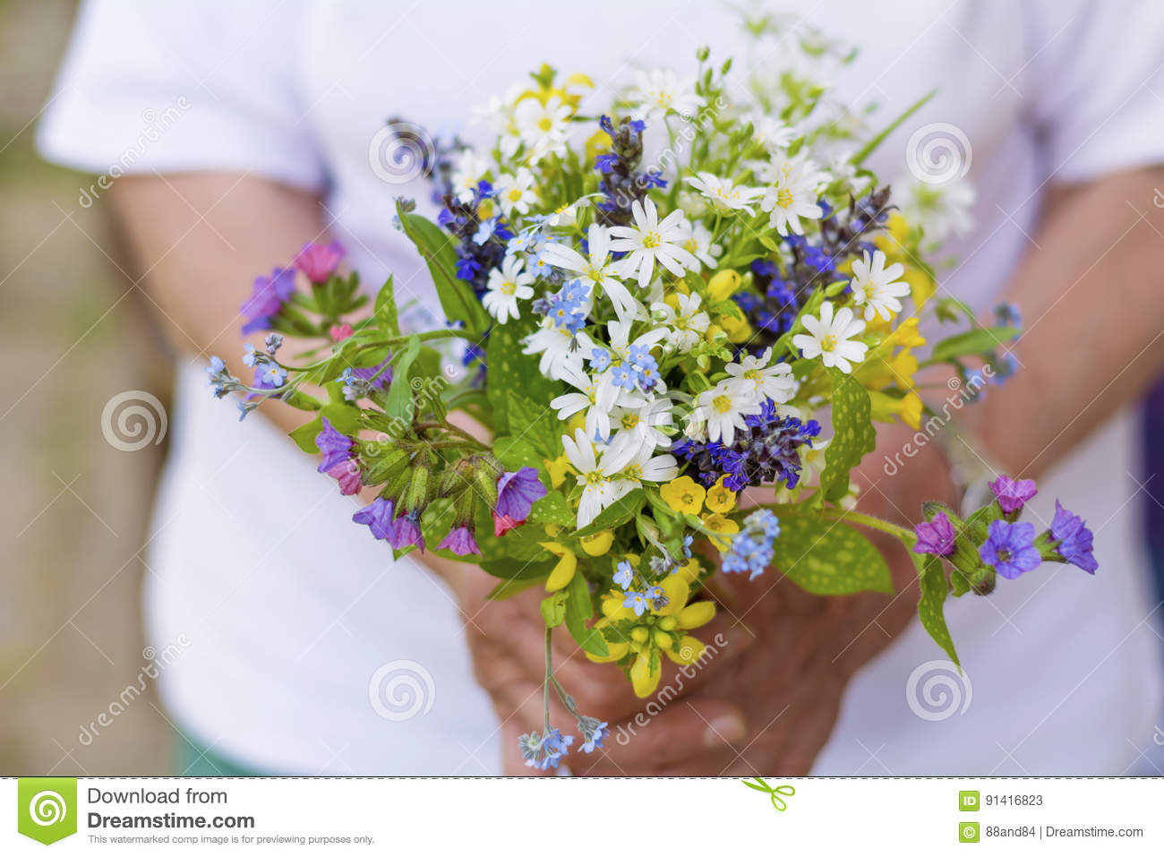 Bouquet of blooming forest flowers in woman`s hands