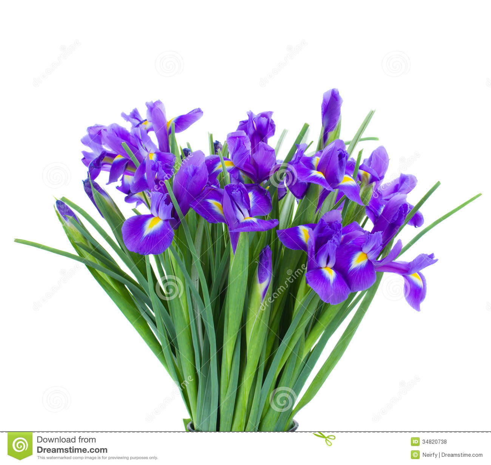 Bouquet of blue irise flowers