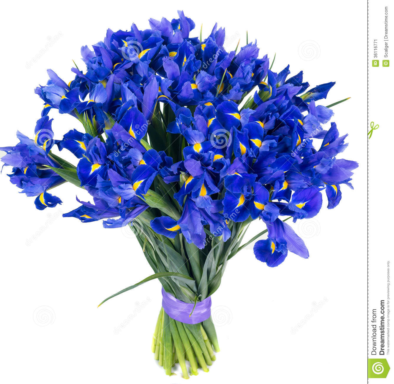 Bouquet Of Blue Irises Stock Image - Image: 36116771