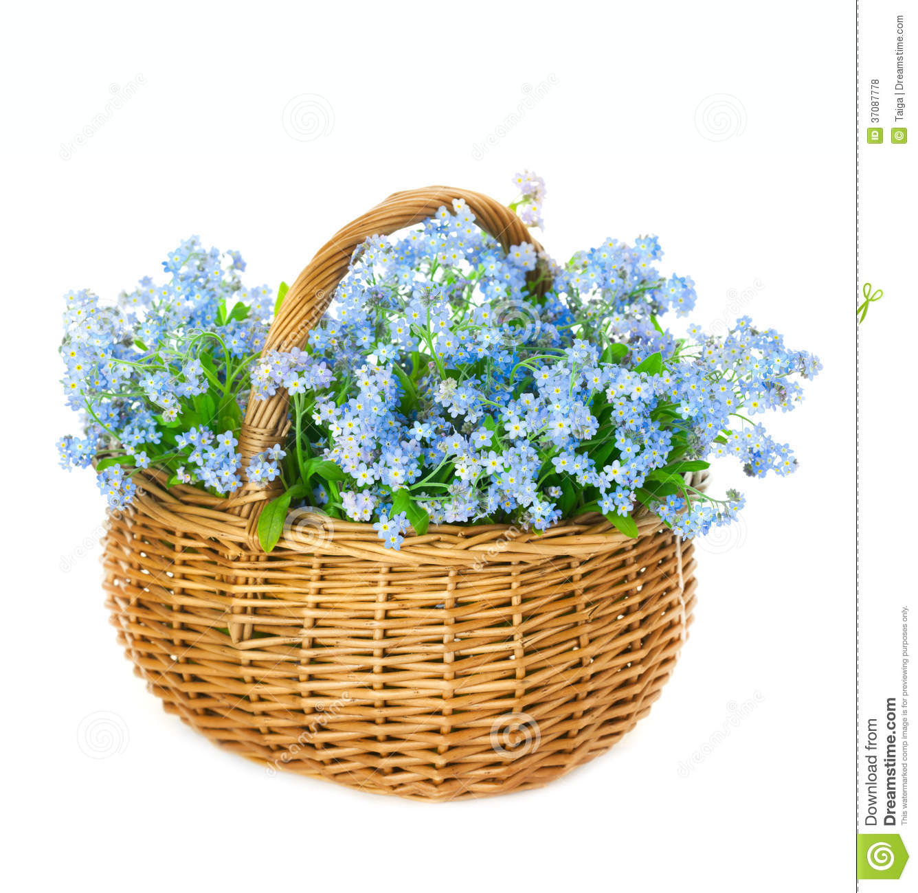 Small Blue Spring Flowers stock photo 545678524 | iStock