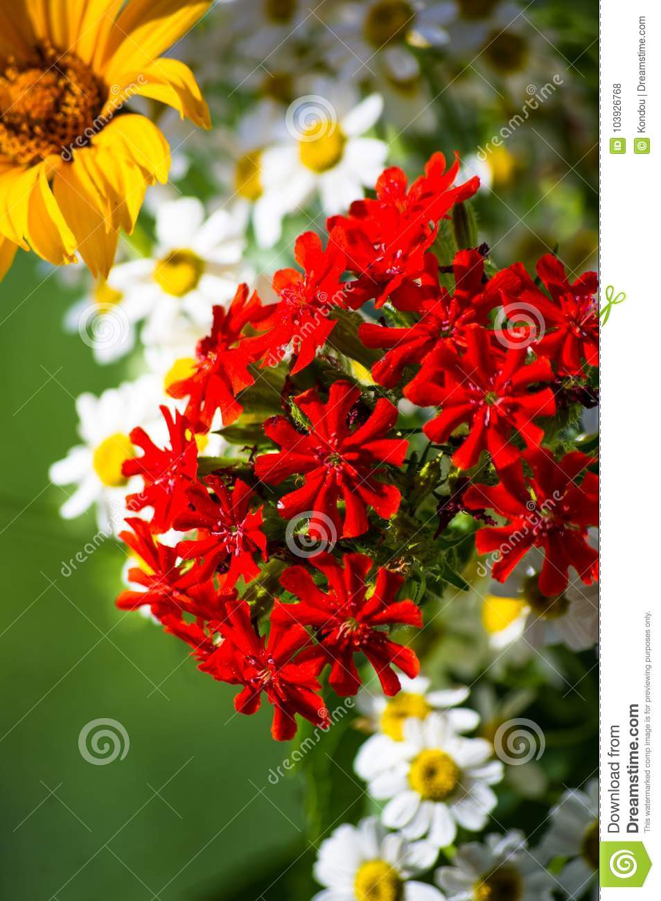 A bouquet of bright spring flowers of various types stock photo a bouquet of bright spring flowers of various types mightylinksfo