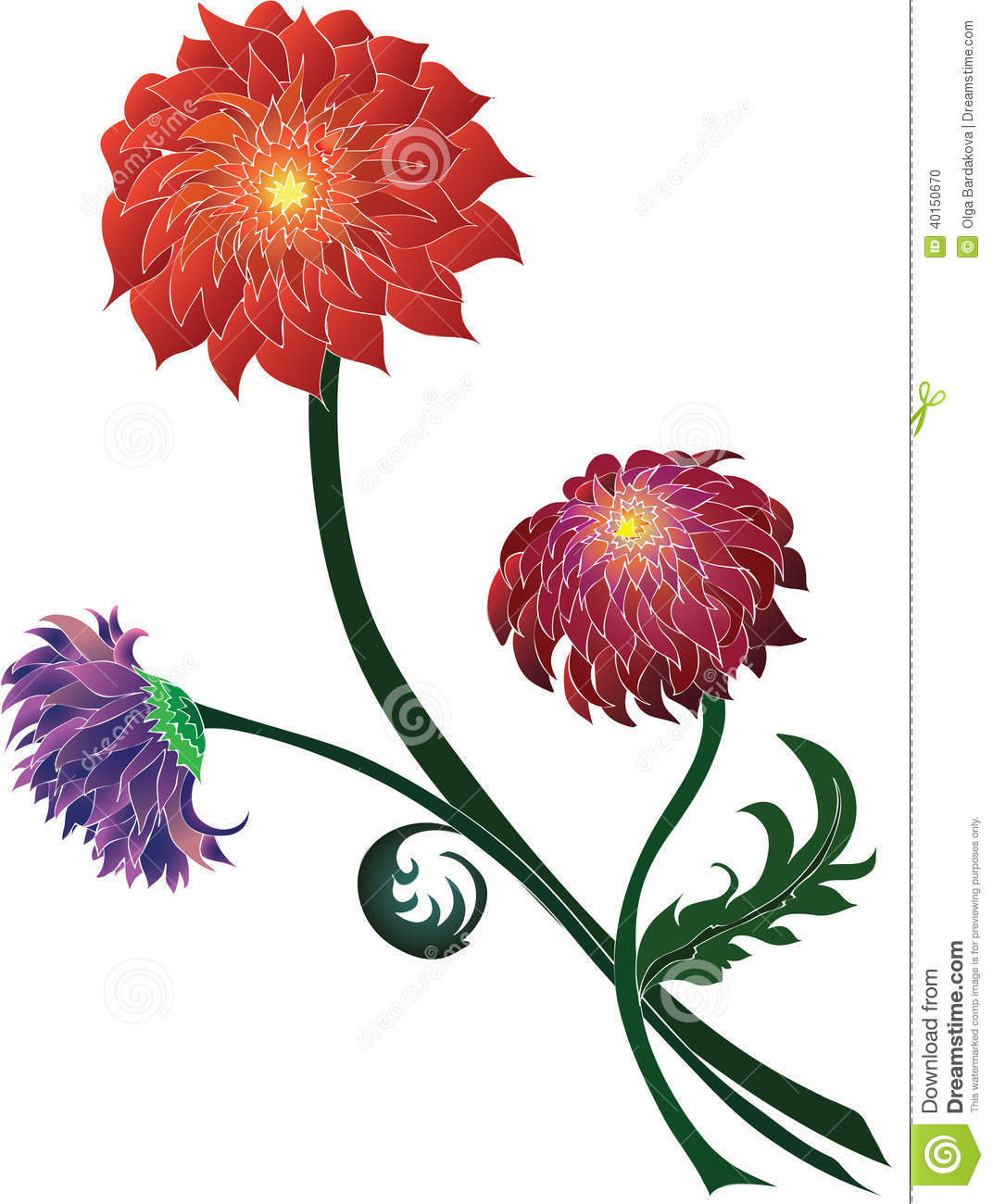 Bouquet of chrysanthemums of different colors stock for Different color roses bouquet