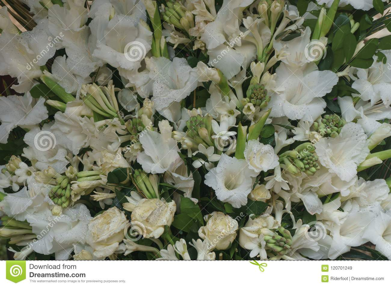 Bouquet Of White Flowers Stock Image Image Of Bouquet 120701249