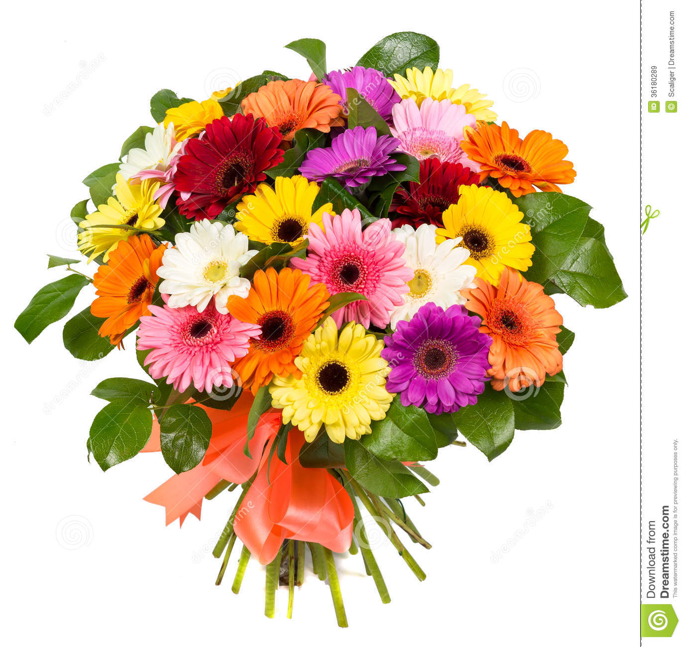 Bouquet of colorful gerberas stock image image of for Bouquet de fleurs gerbera