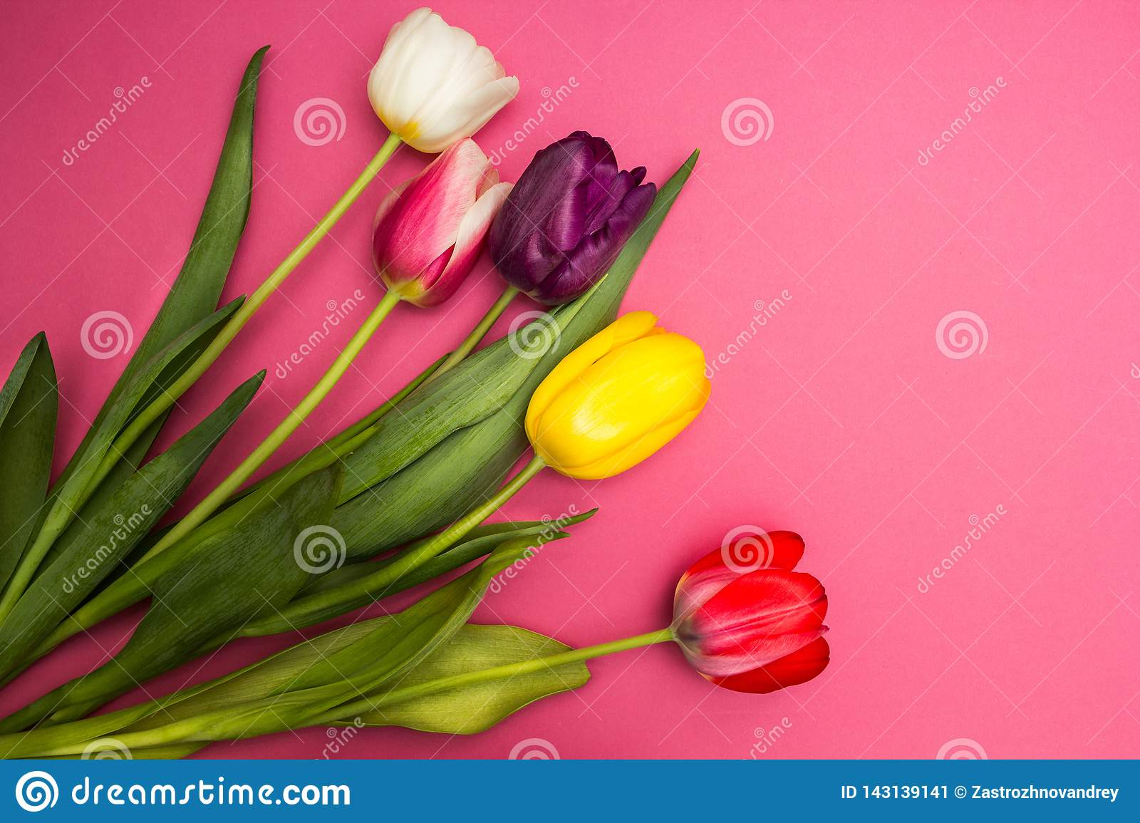 Bouquet of colorful tulips on a pink background