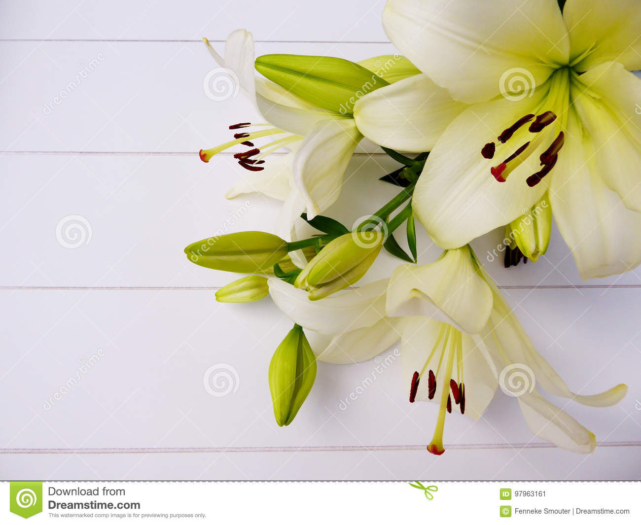 Bouquet of cream white colored lily flowers and flower bulbs stock bouquet of cream white colored lily flowers and flower bulbs izmirmasajfo