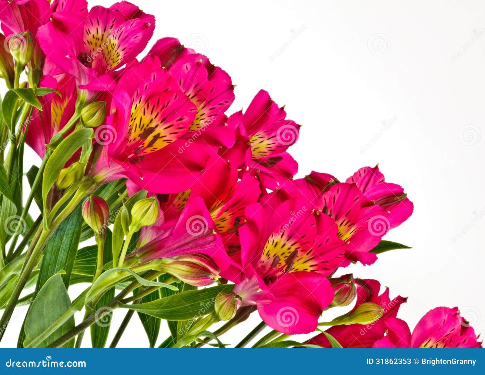 Bouquet d 39 alstroemeria rose lumineux photos stock image for Bouquet de fleurs lumineux