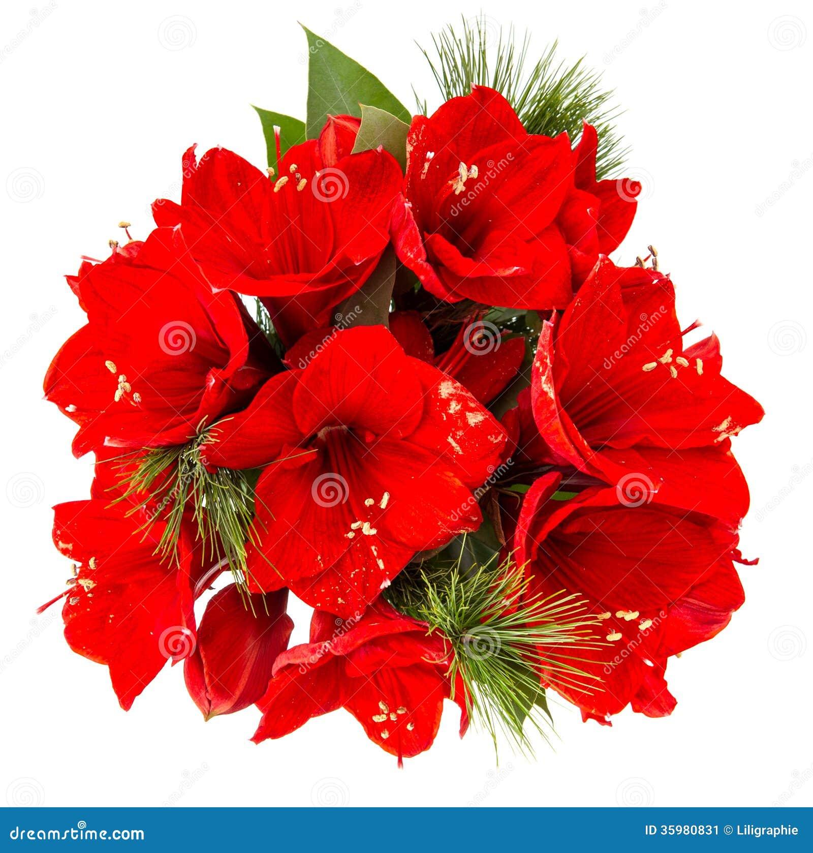 Bouquet d 39 amaryllis fleurs rouges de no l image stock for Amaryllis fleurs