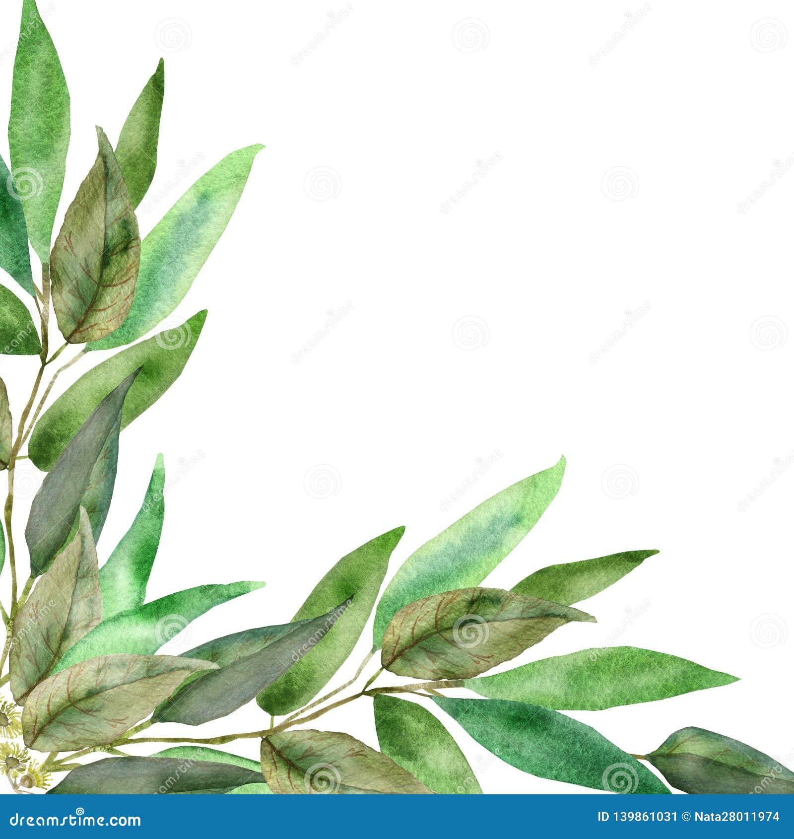 Feuille D Eucalyptus Bouquet bouquet d'eucalyptus sur un fond blanc branches d'aquarelle