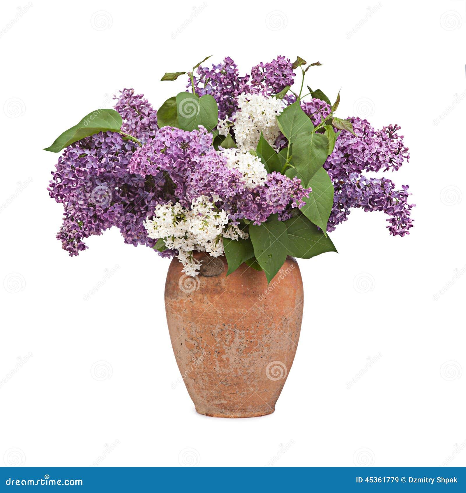 Bouquet d un lilas dans le vase en céramique sur le blanc