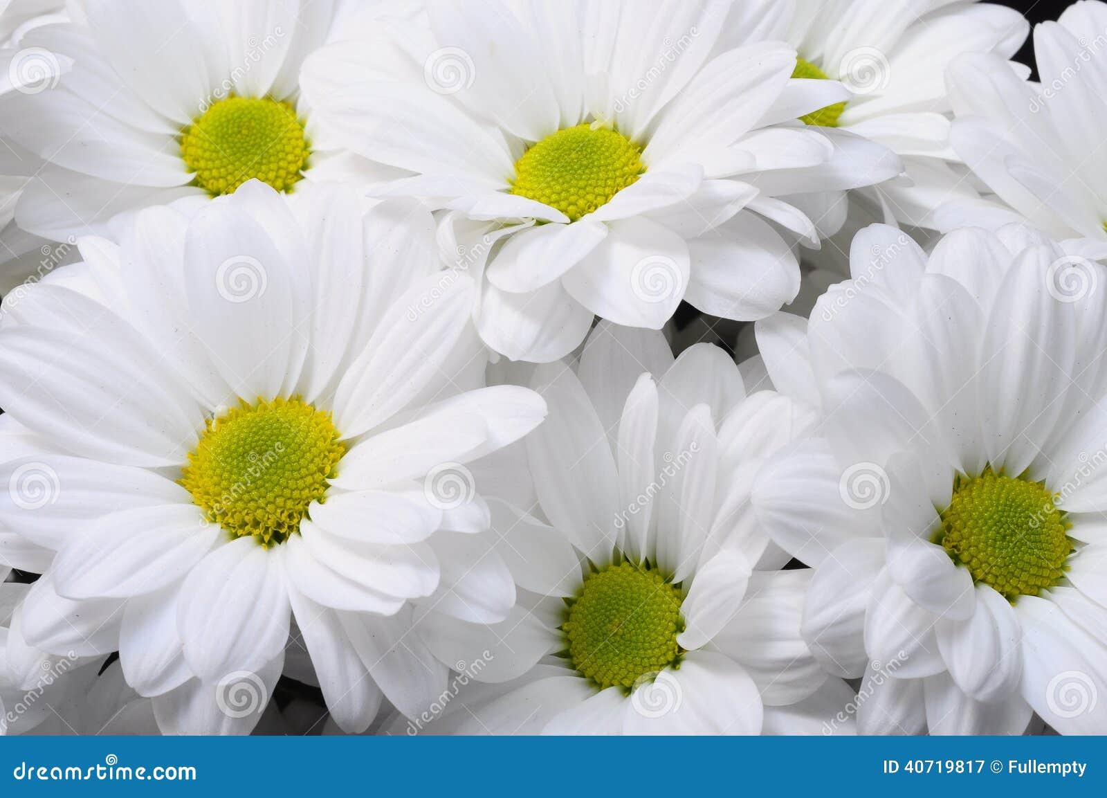 Bouquet de fleur de marguerite blanche image stock image - Image fleur marguerite ...