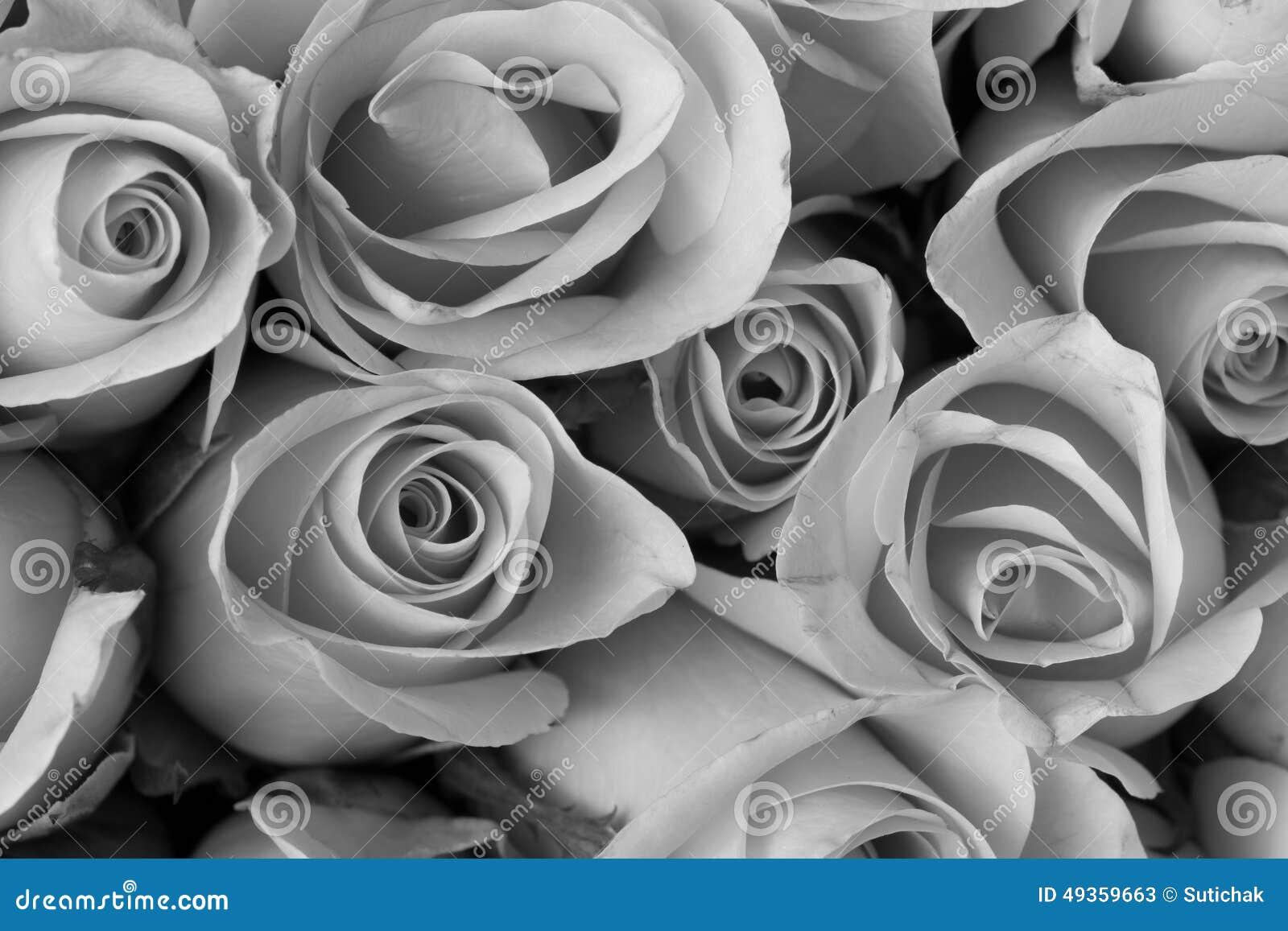 Bouquet De Fleur De Rose Couleur Noire Et Blanche Image Stock