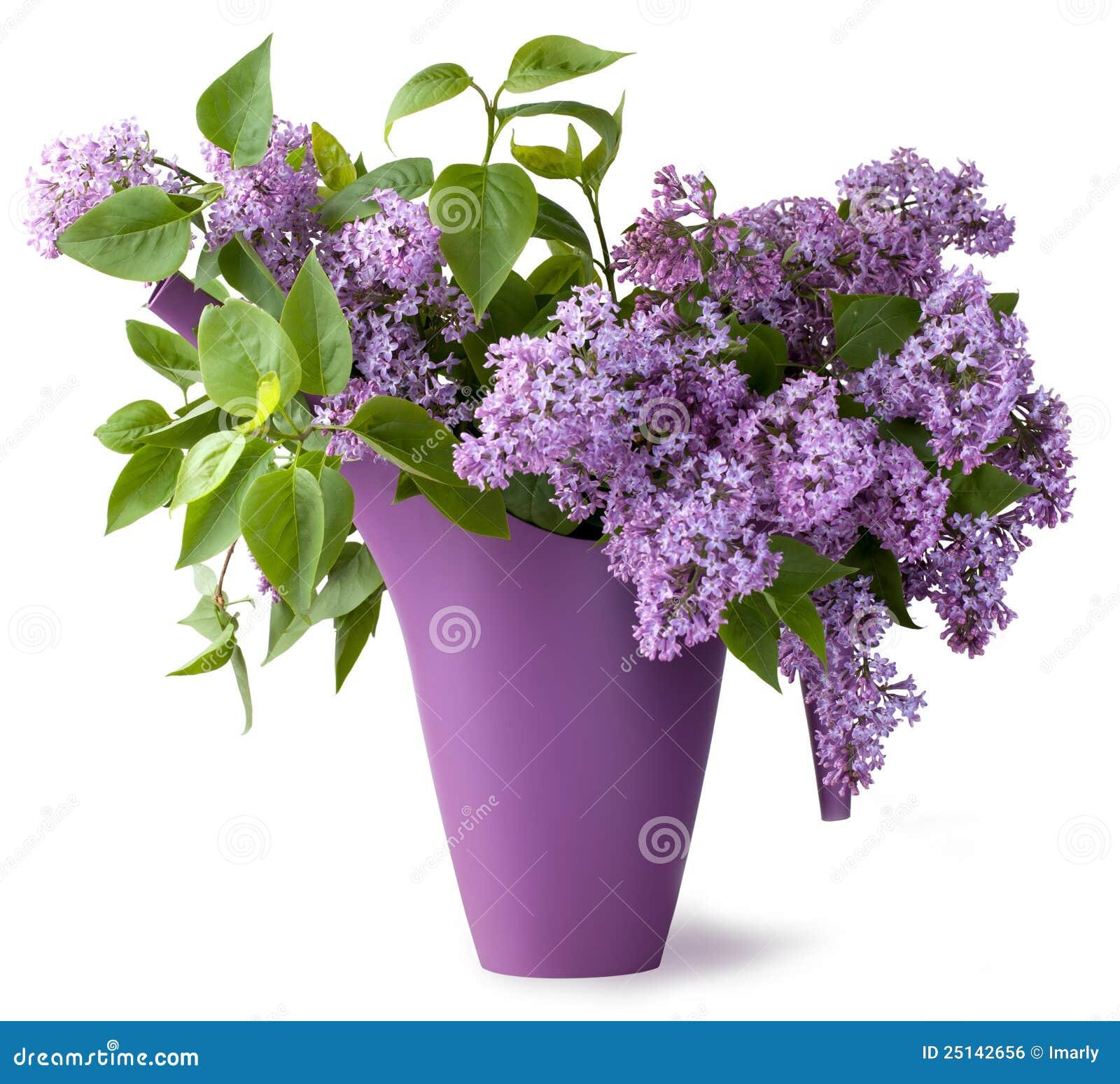 Bouquet de fleur lilas image libre de droits image 25142656 for Bouquet de fleurs lilas