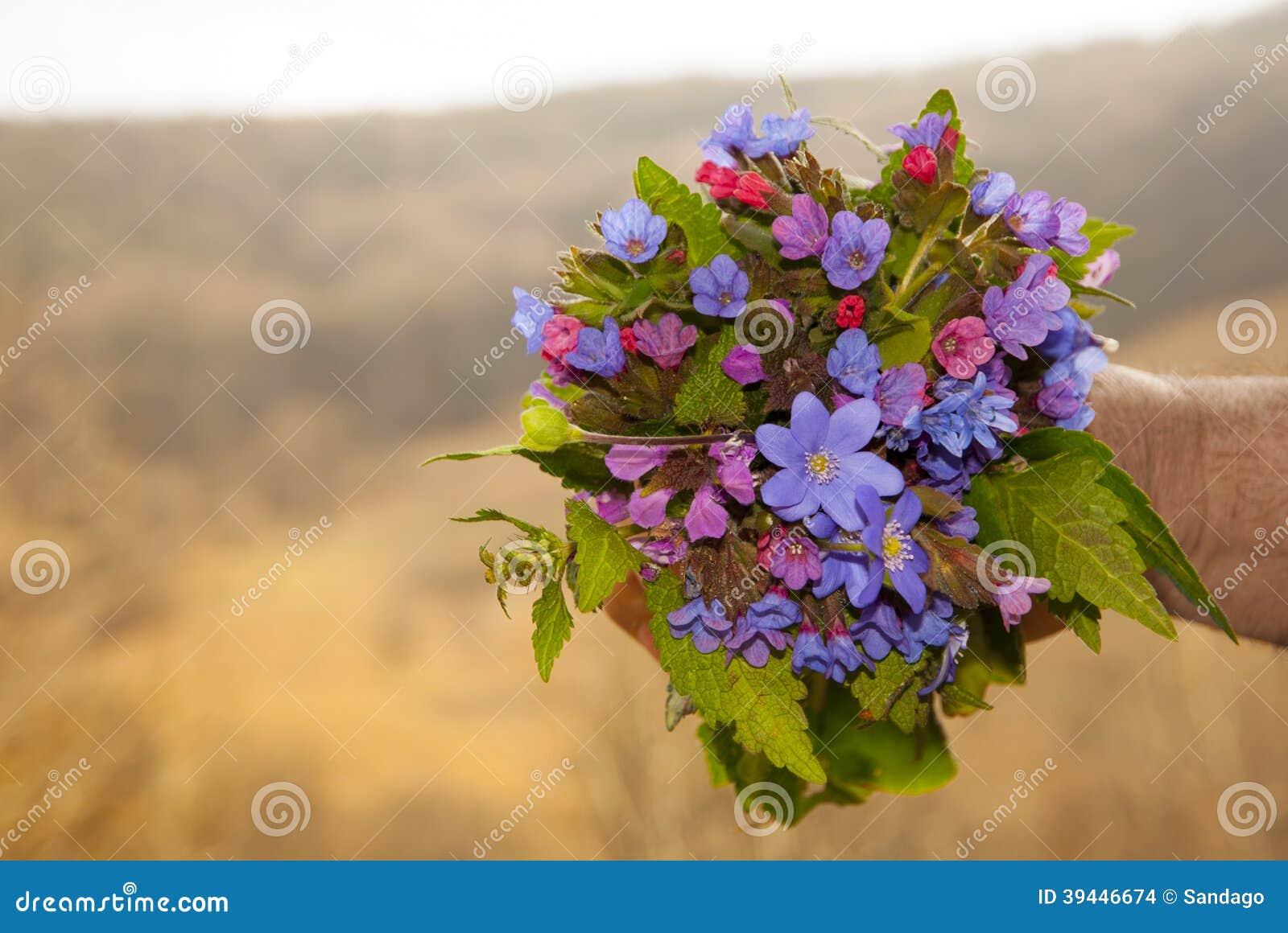 Bouquet de fleurs sauvages photo stock image du image 39446674 - Bouquet de fleurs sauvages ...