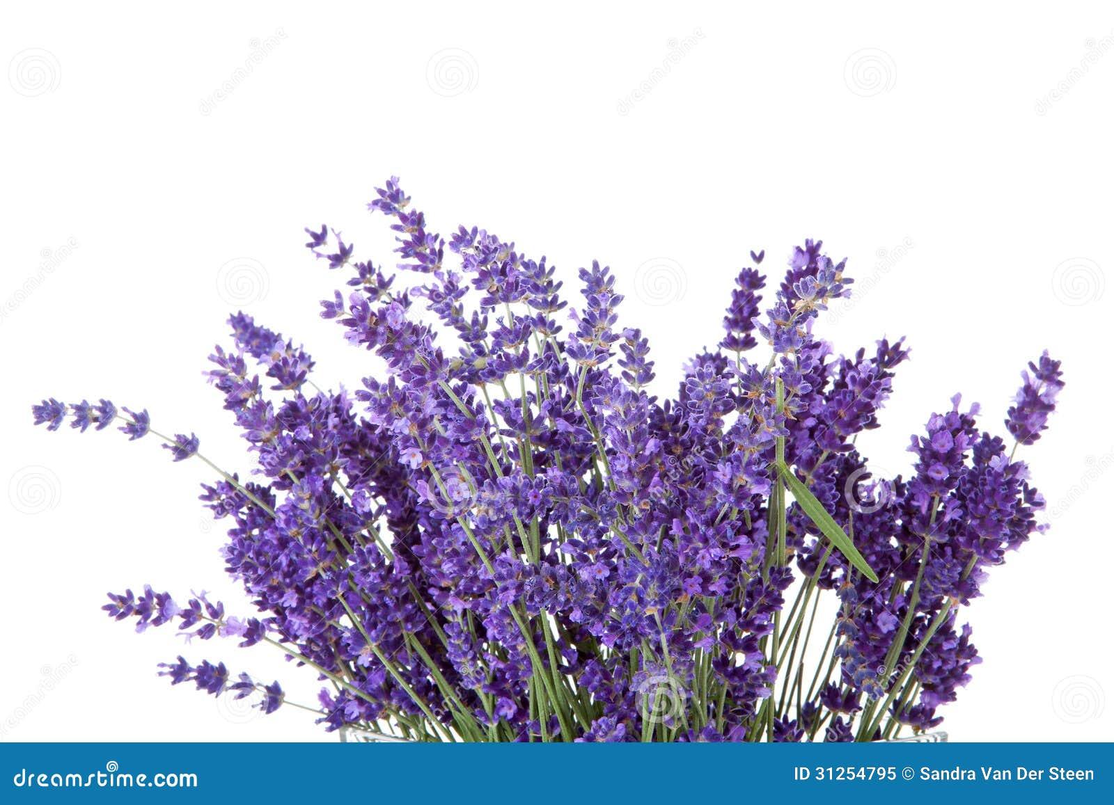 Bouquet de lavende sélectionné