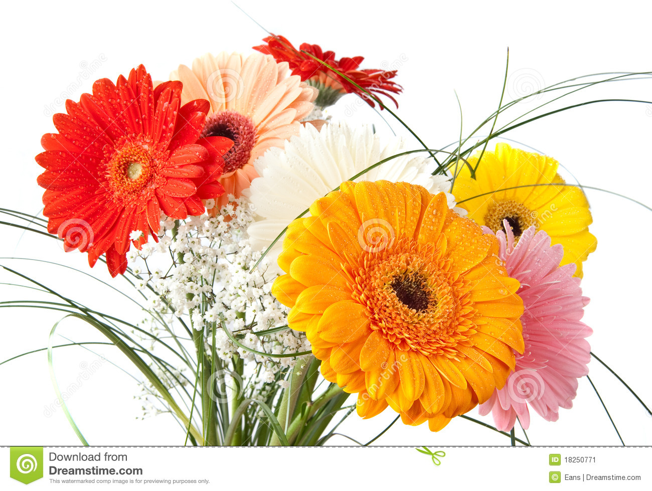 Bouquet de marguerite de gerbera image stock image 18250771 for Bouquet de fleurs gerbera