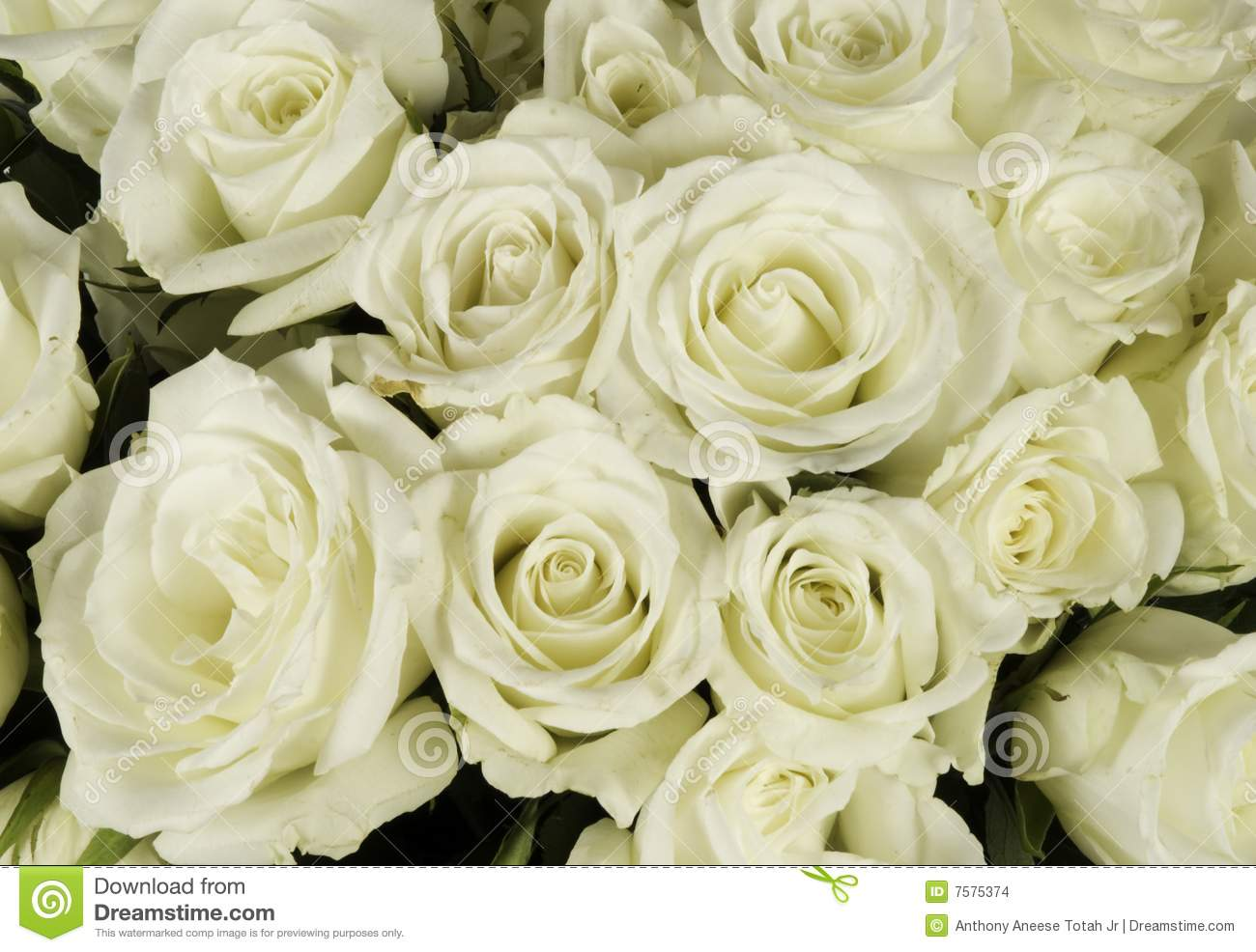 Bouquet de mariage de rose blanche photo stock image du for Bouquet de roses blanches