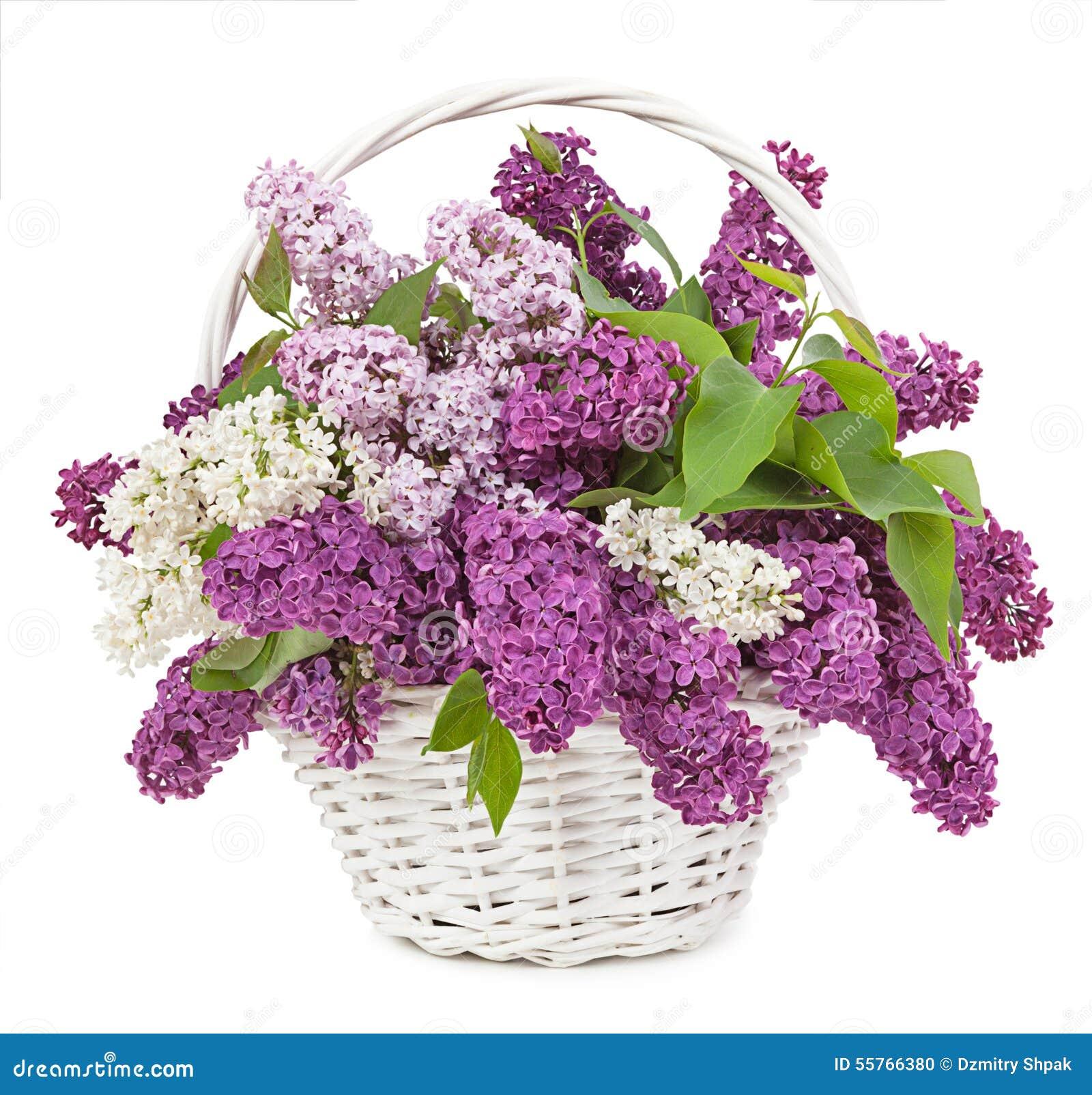 bouquet de source le muguet et lilas dans un isolat de panier photo stock image du salutation. Black Bedroom Furniture Sets. Home Design Ideas