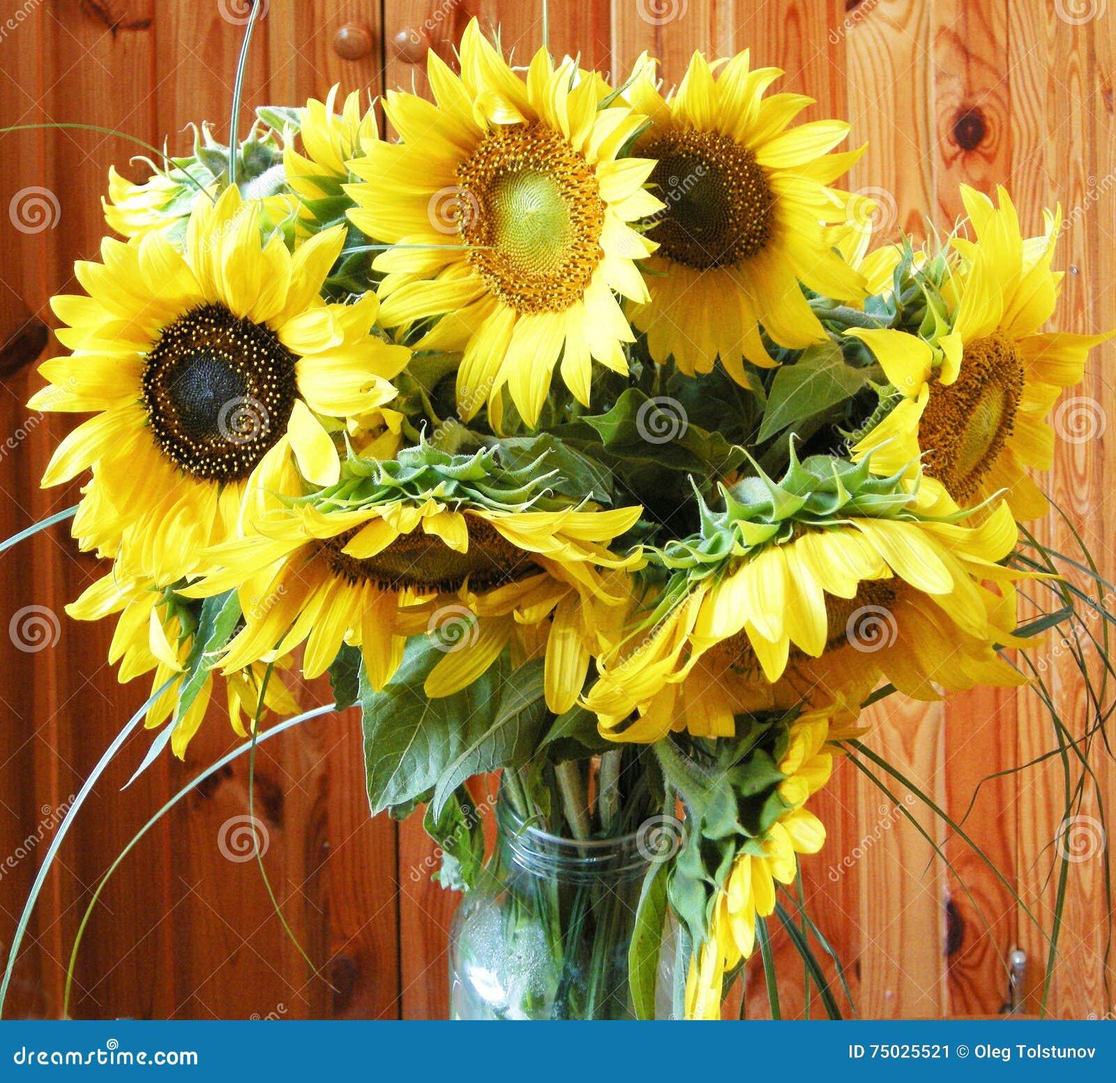 bouquet de tournesol image stock. image du bouquet, lame - 75025521