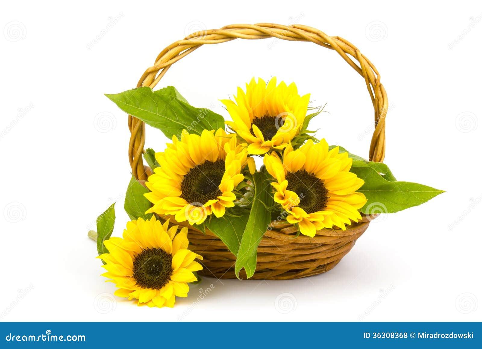 bouquet de tournesol dans un panier photo stock - image du jour