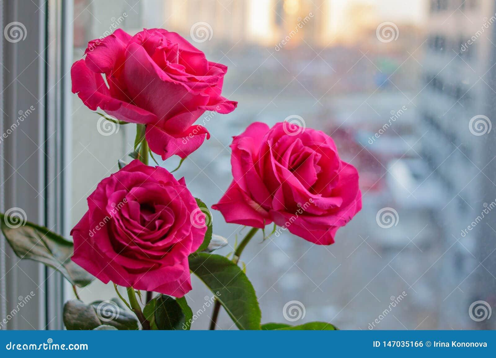 Bouquet de trois roses roses sensibles sur la fenêtre