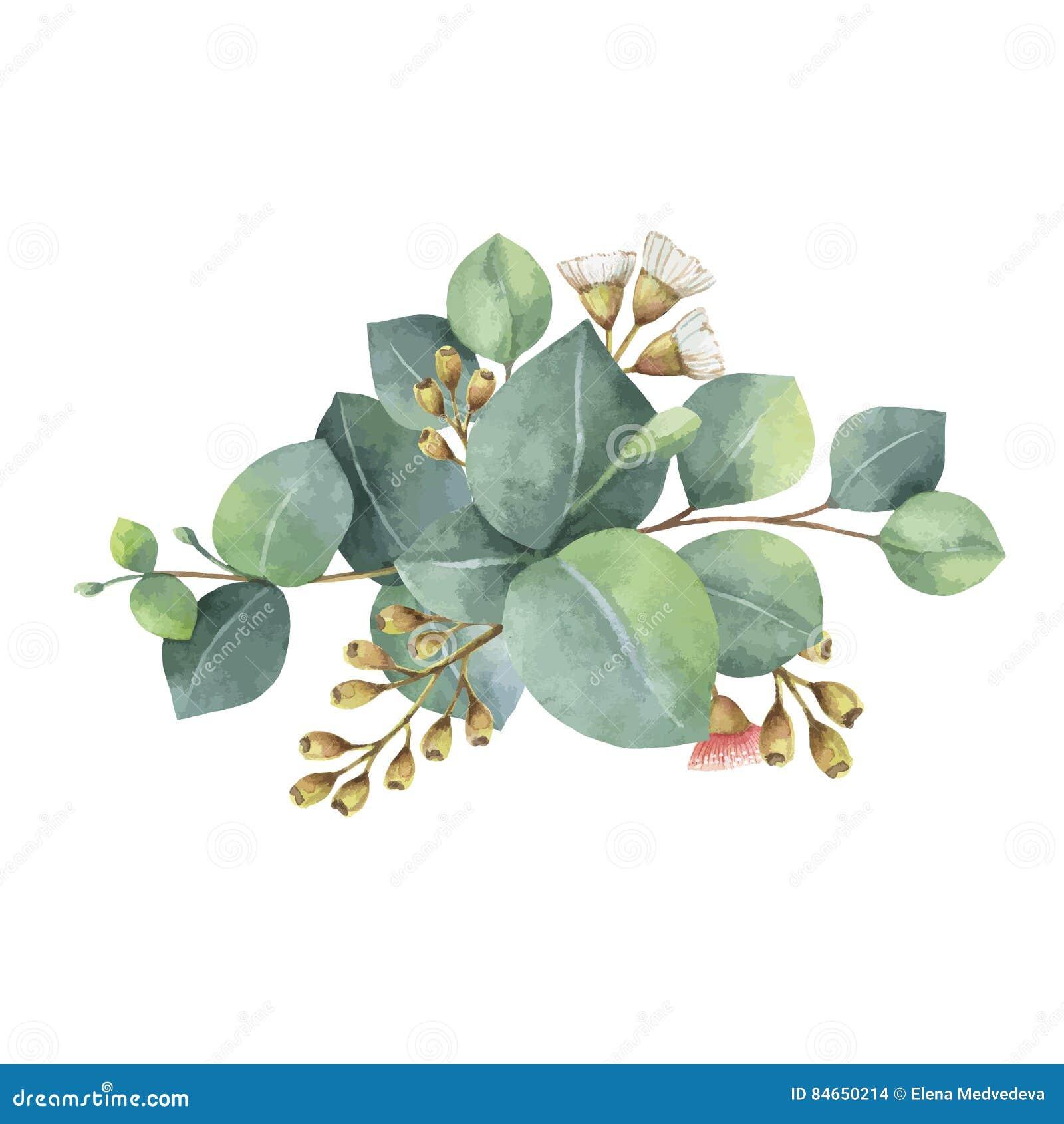 Feuille D Eucalyptus Bouquet bouquet de vecteur d'aquarelle avec les feuilles et les
