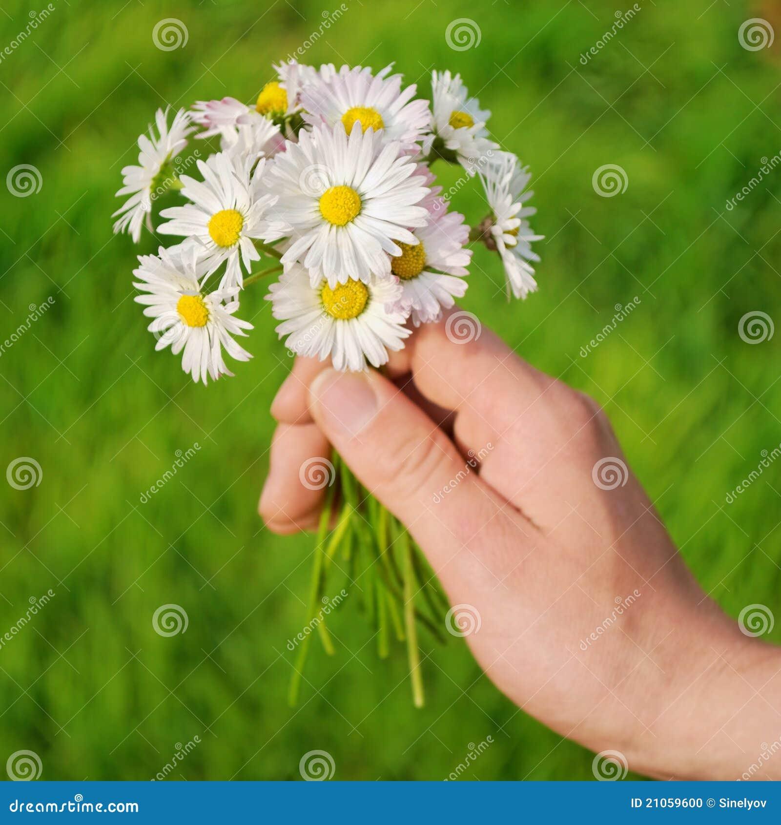 bouquet de fleurs marguerite