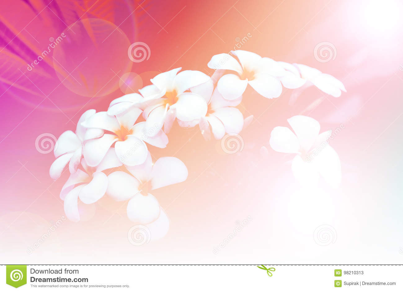 Bouquet Des Fleurs De Plumeria Dans Le Jardin Ton De Vintage De ...